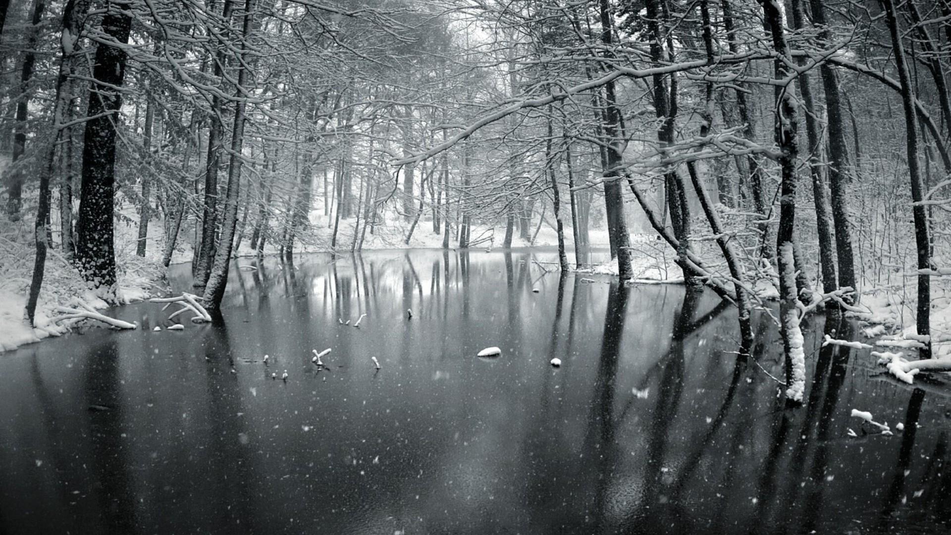 Snow forest day wallpaper | AllWallpaper.in #2065 | PC | en