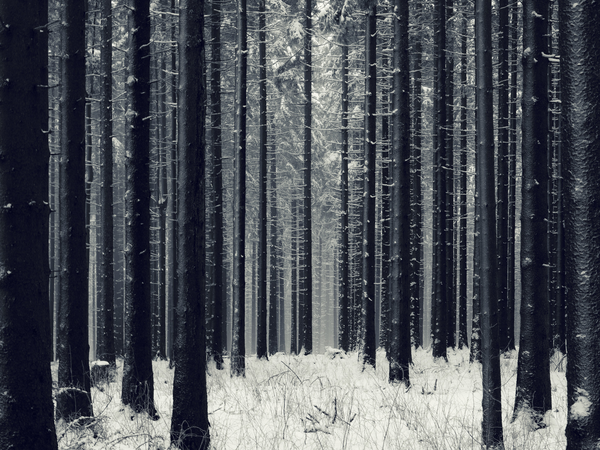Snow Forest HD Wallpapers – PicVenue – HD Wallpapers