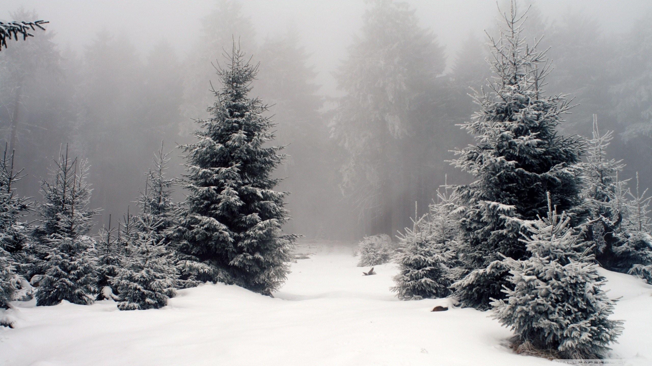 Snow On Fir Trees wallpaper | Lovely christmas glitteriness | Pinterest