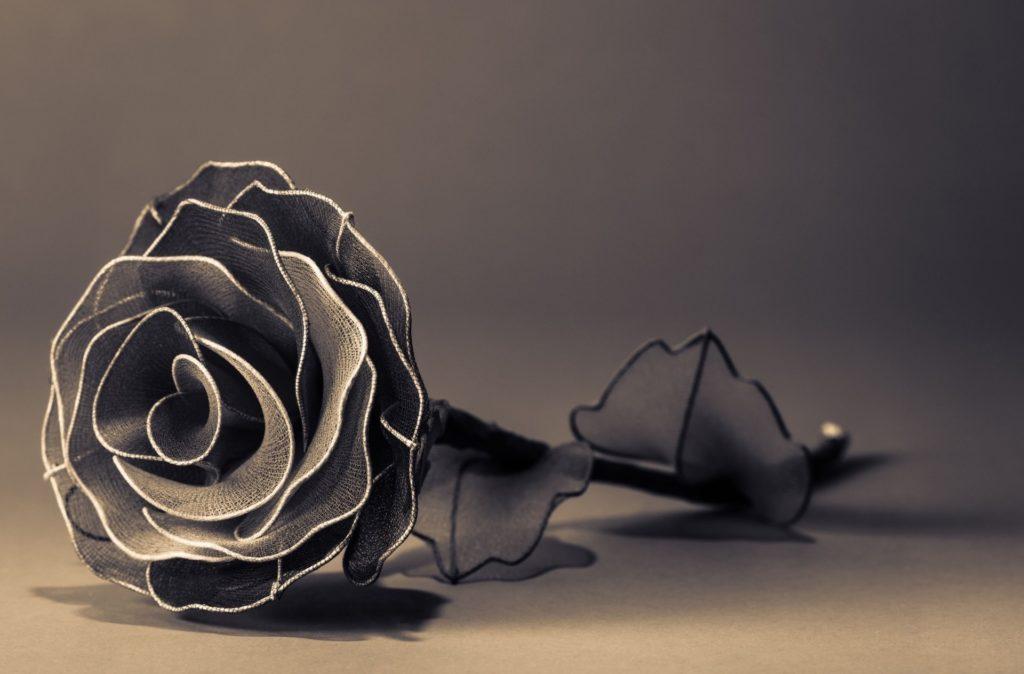 flower flower rose black and white petals pu petals background wallpaper  widescreen full screen widescreen hd