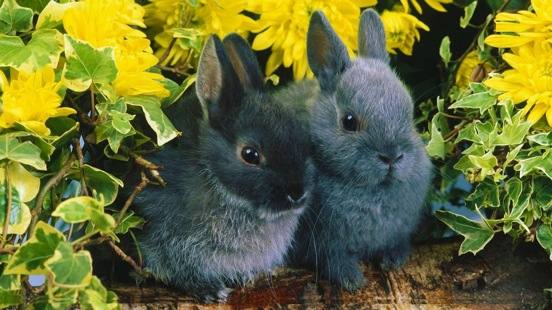 Cute Black Bunny Hd Wallpaper 25 Free Hd Wallpaper. Cute Black Bunny Hd  Wallpaper 25 Free Hd Wallpaper