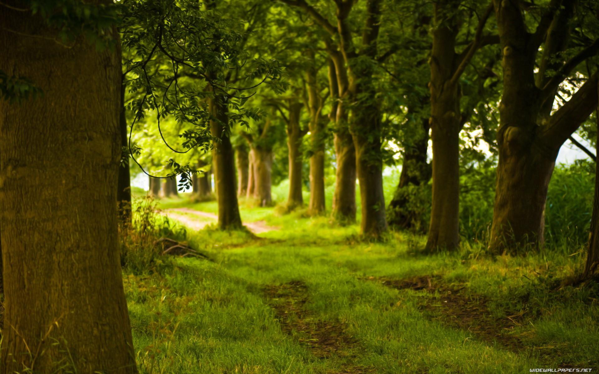 green-wallpaper-road-path