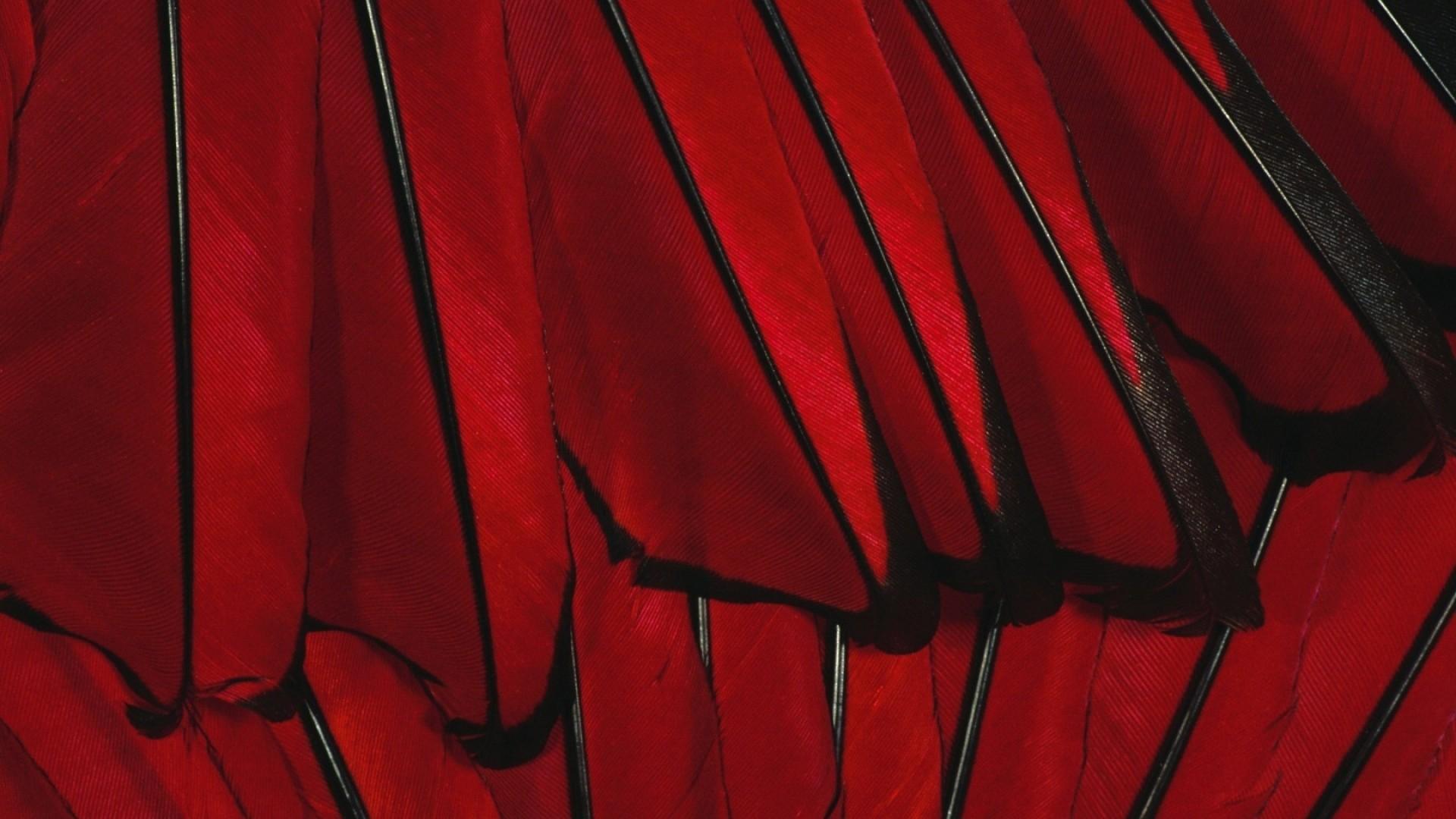 Wallpaper black, red, flower
