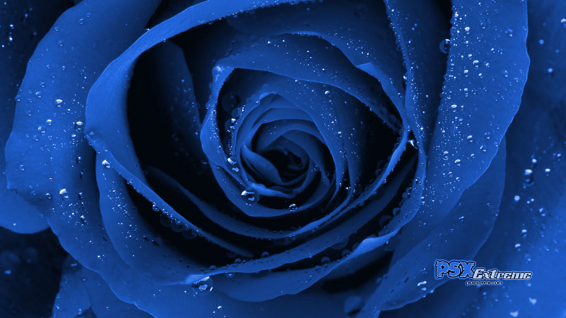 Cool Blue Images …