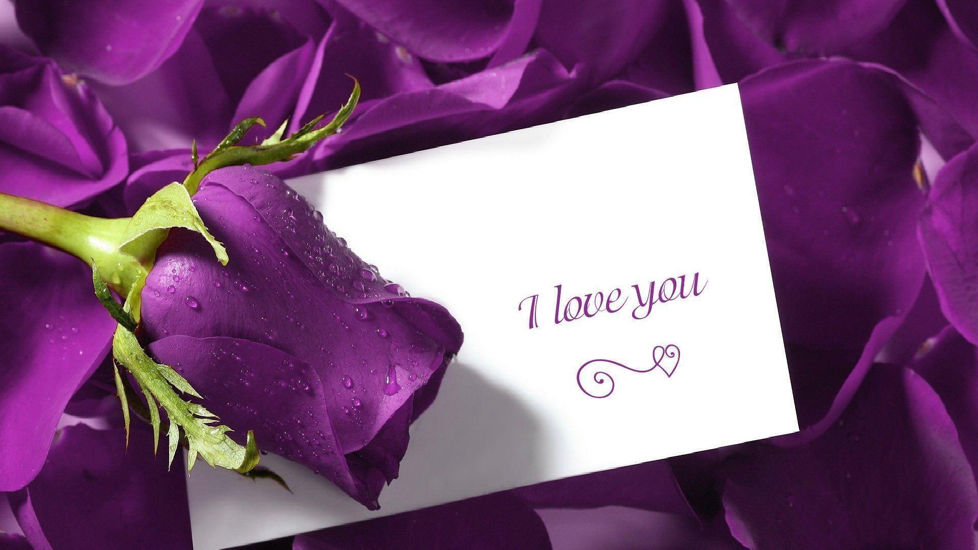 Cute Love And Purple Rose Flower Wallpaper Des #7055 Wallpaper .