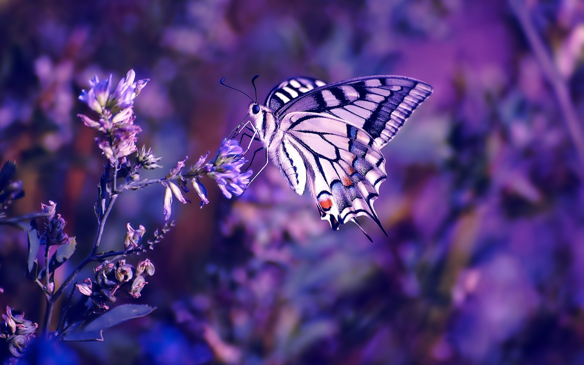 latest stunning hd purple wallpapers with hd purple background