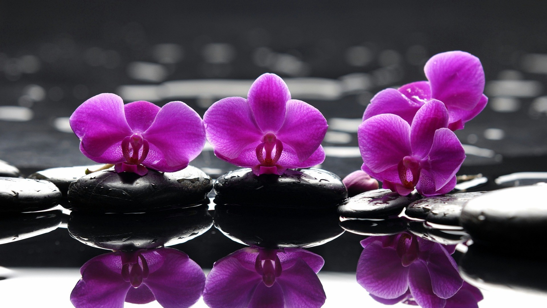 Purple Orchid Flower Wallpapers HD images