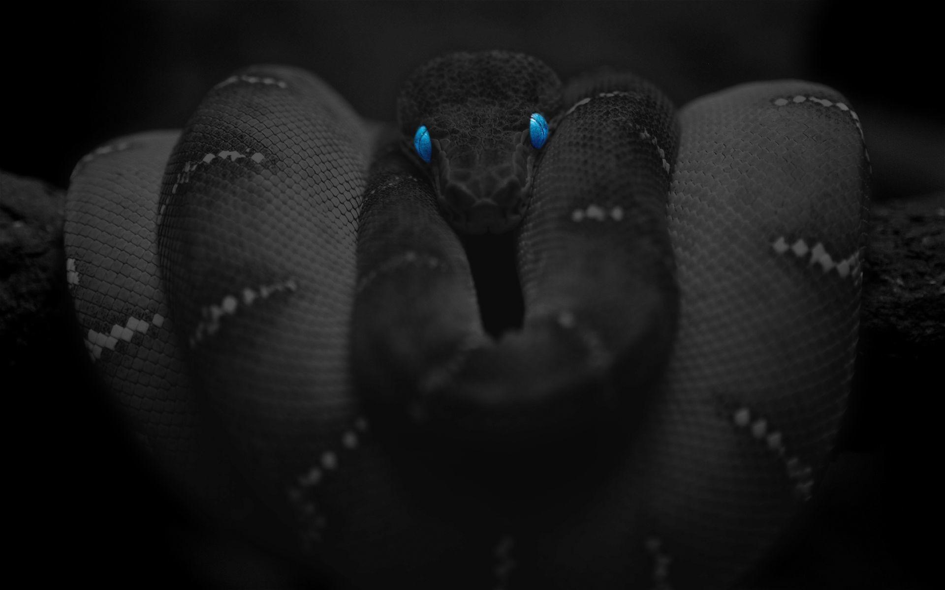 Black-Snake-Blue-Eyes-Wallpaper.jpg