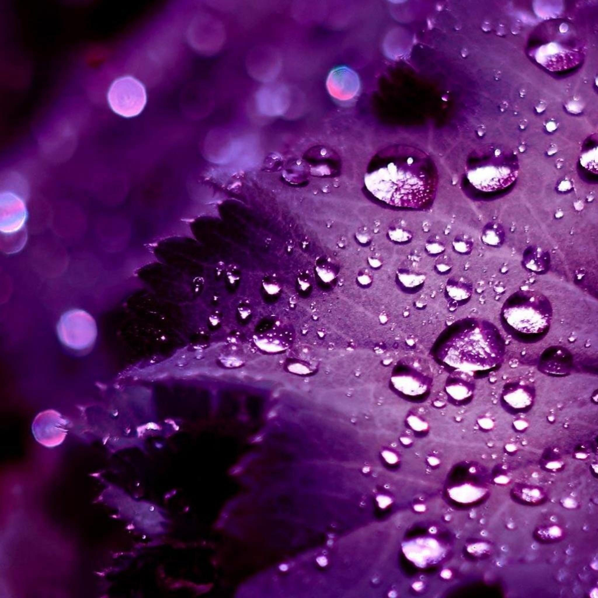 iPad Retina HD Wallpaper Purple Leaves – iPad, iPad Air, iPad Pro, ios 11,  iPhone 6, iPhone 7 Plus & Cydia Help
