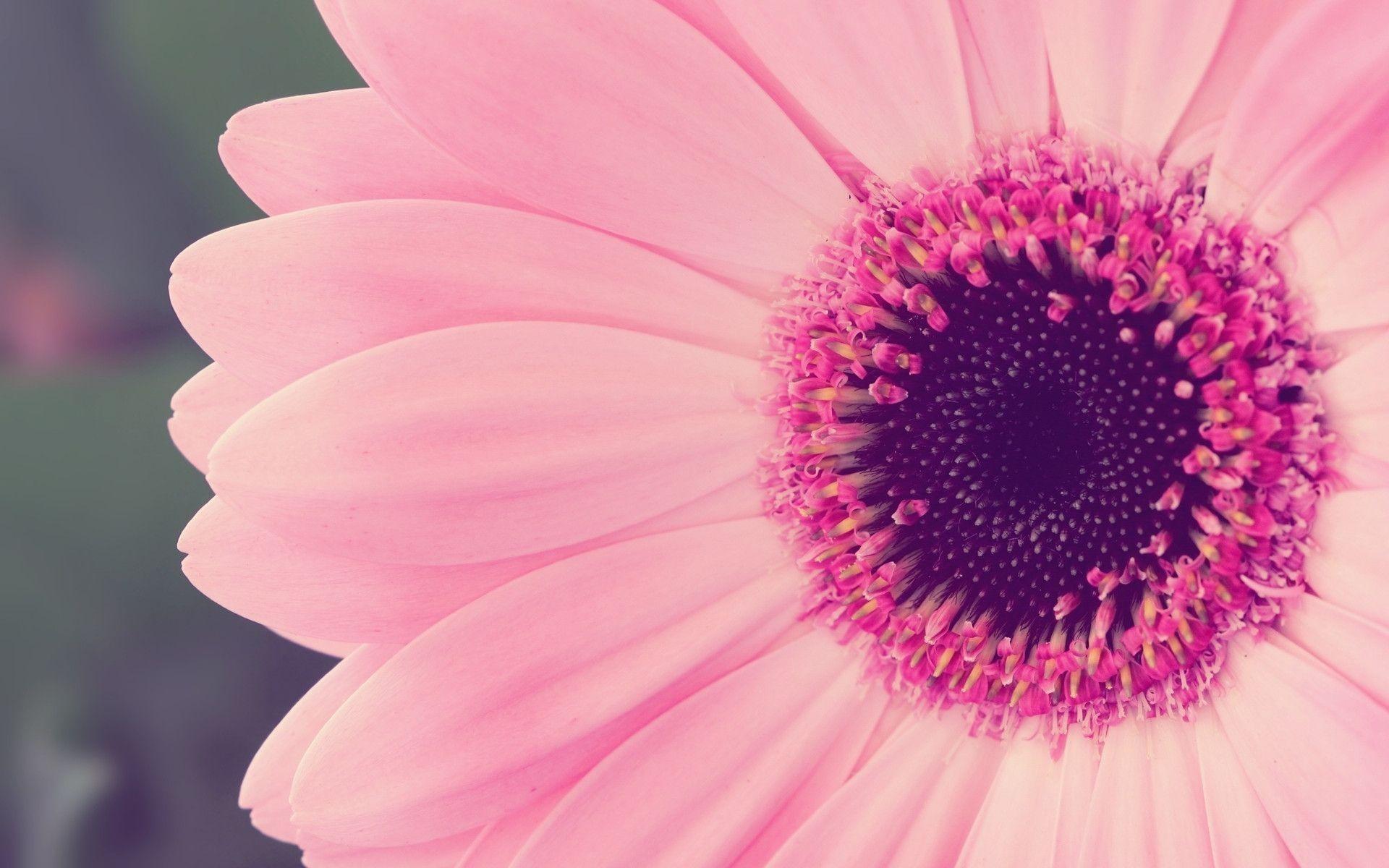 Pink Flower HD Wallpaper | Pink Flower Photos | Cool Wallpapers