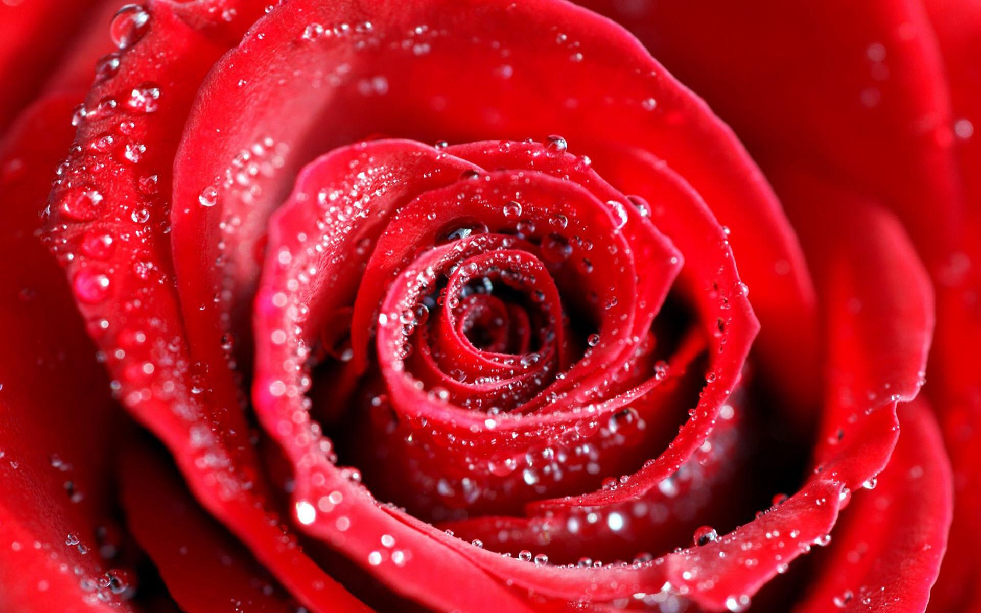 Red Wallpaper 23
