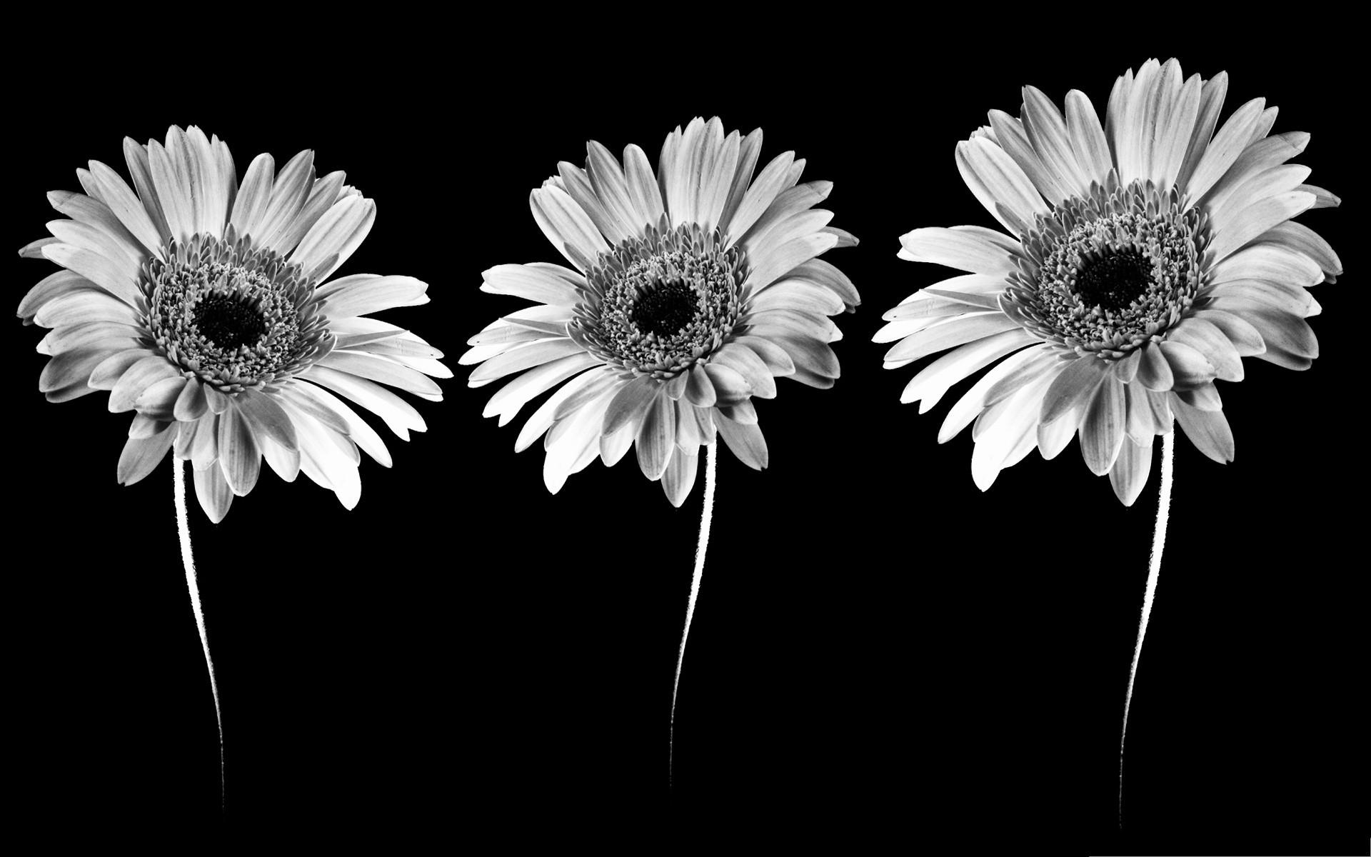 Black white Money flowers images wallpaper.