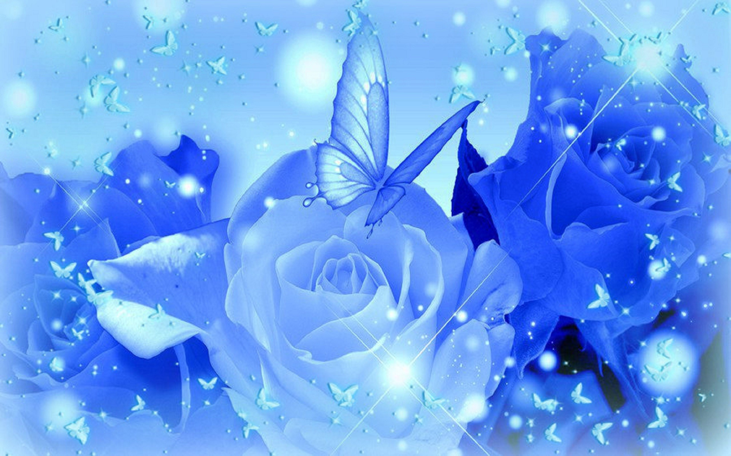 light blue roses wallpaper Widescreen Wallpaper