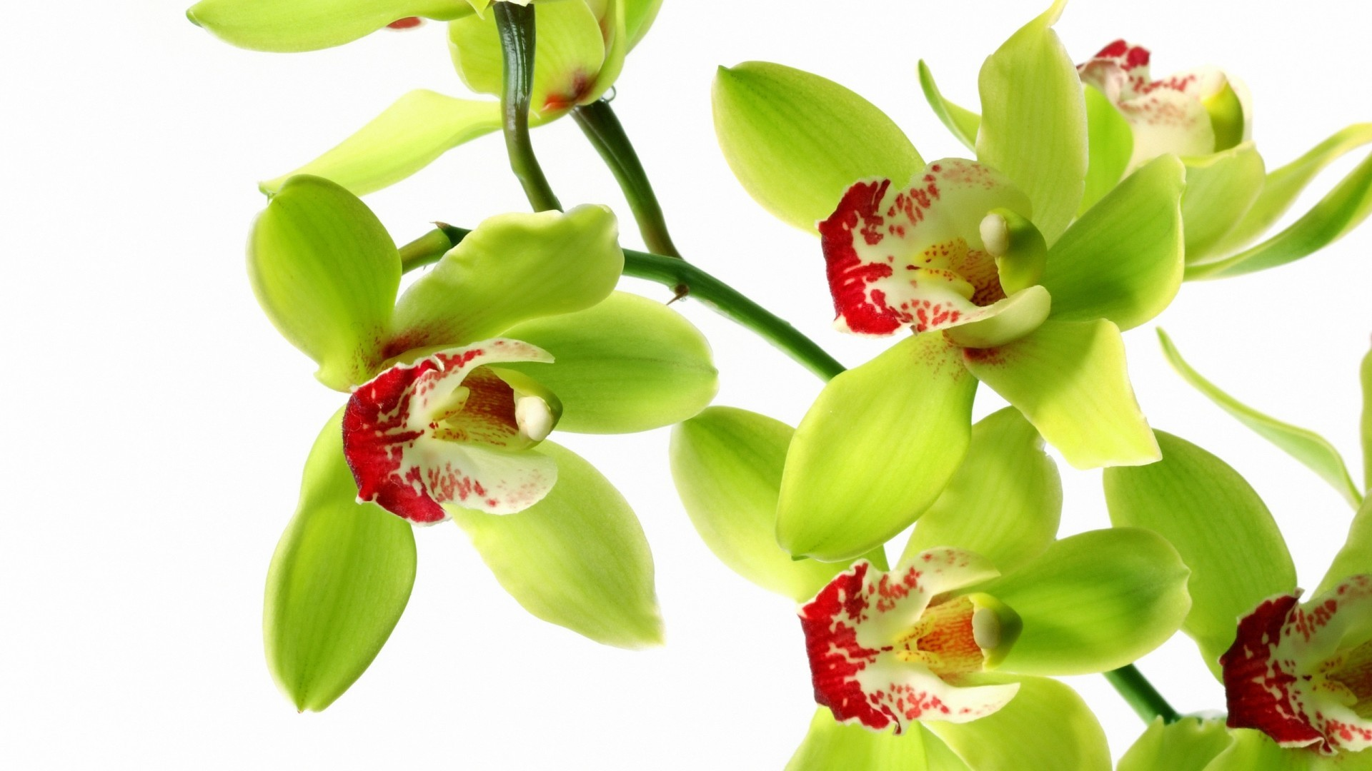 Exotic+Orchids | Flower white orchid wallpaper abstract image Abstract HD  Wallpaper .
