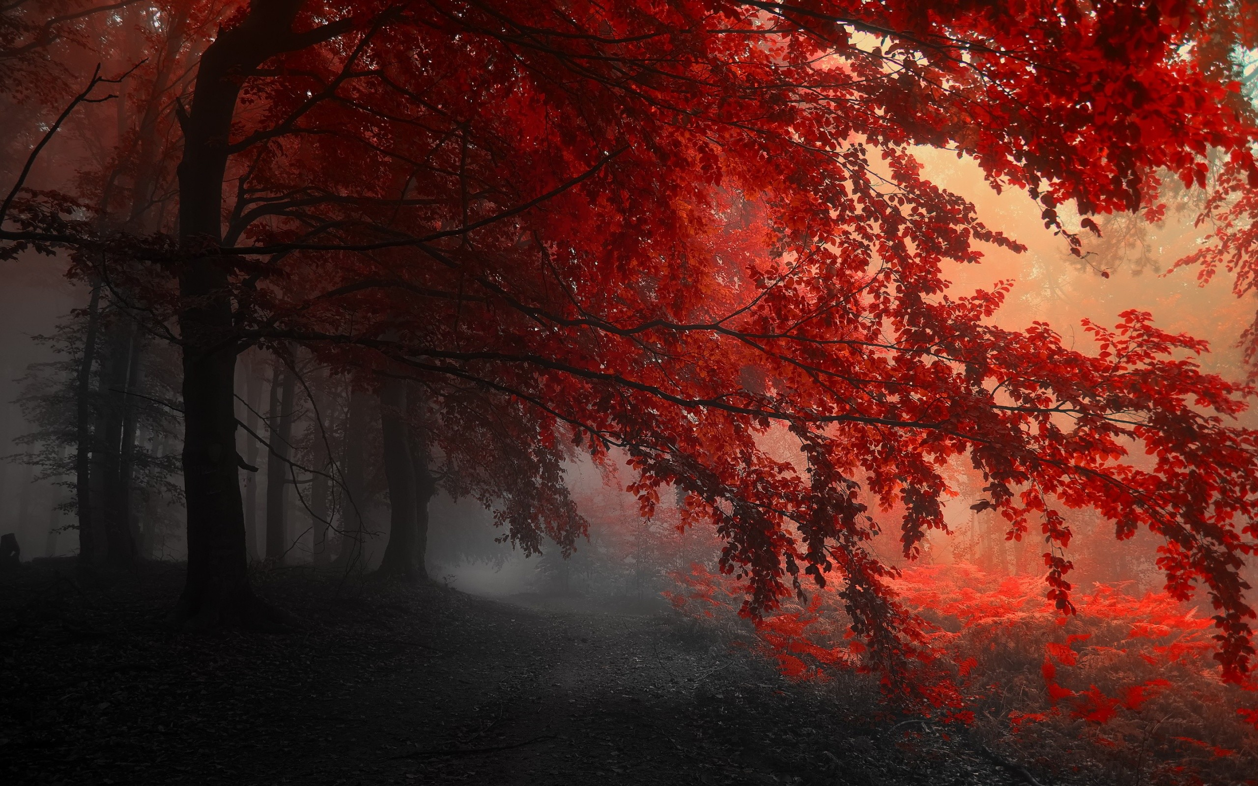 Red Wallpapers Widescreen …