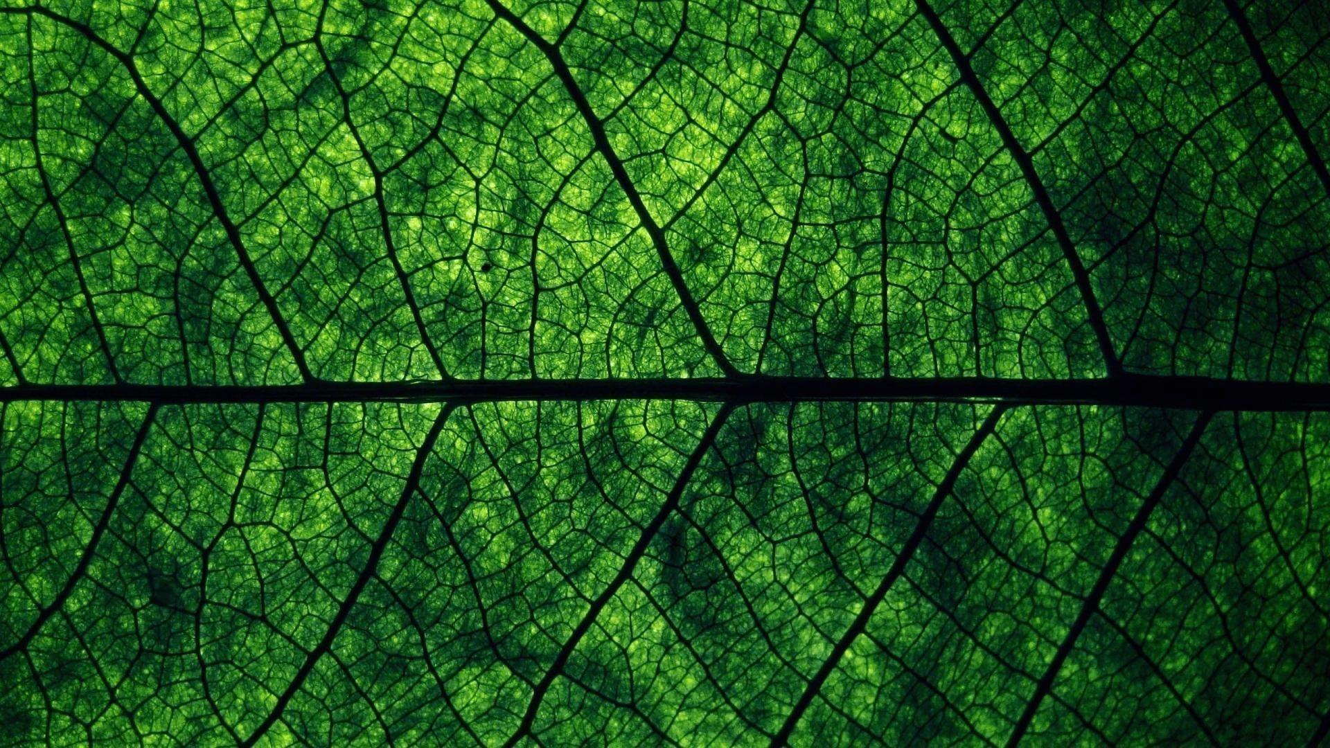 dark green wallpaper hd wallpapersafari updated
