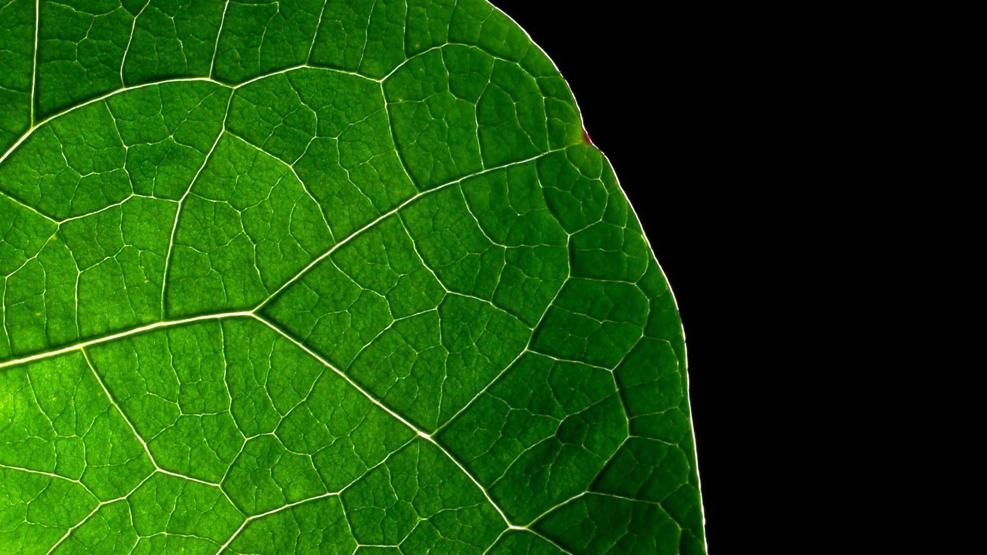 Dark Green Leaves Wallpapers HD.