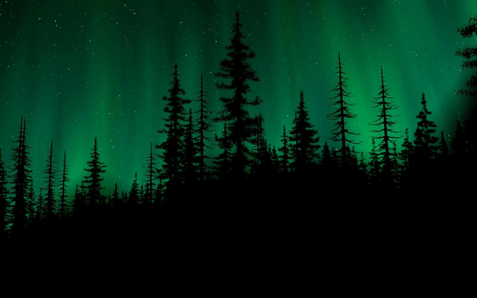 Dark-Woods-Image-Download-Free