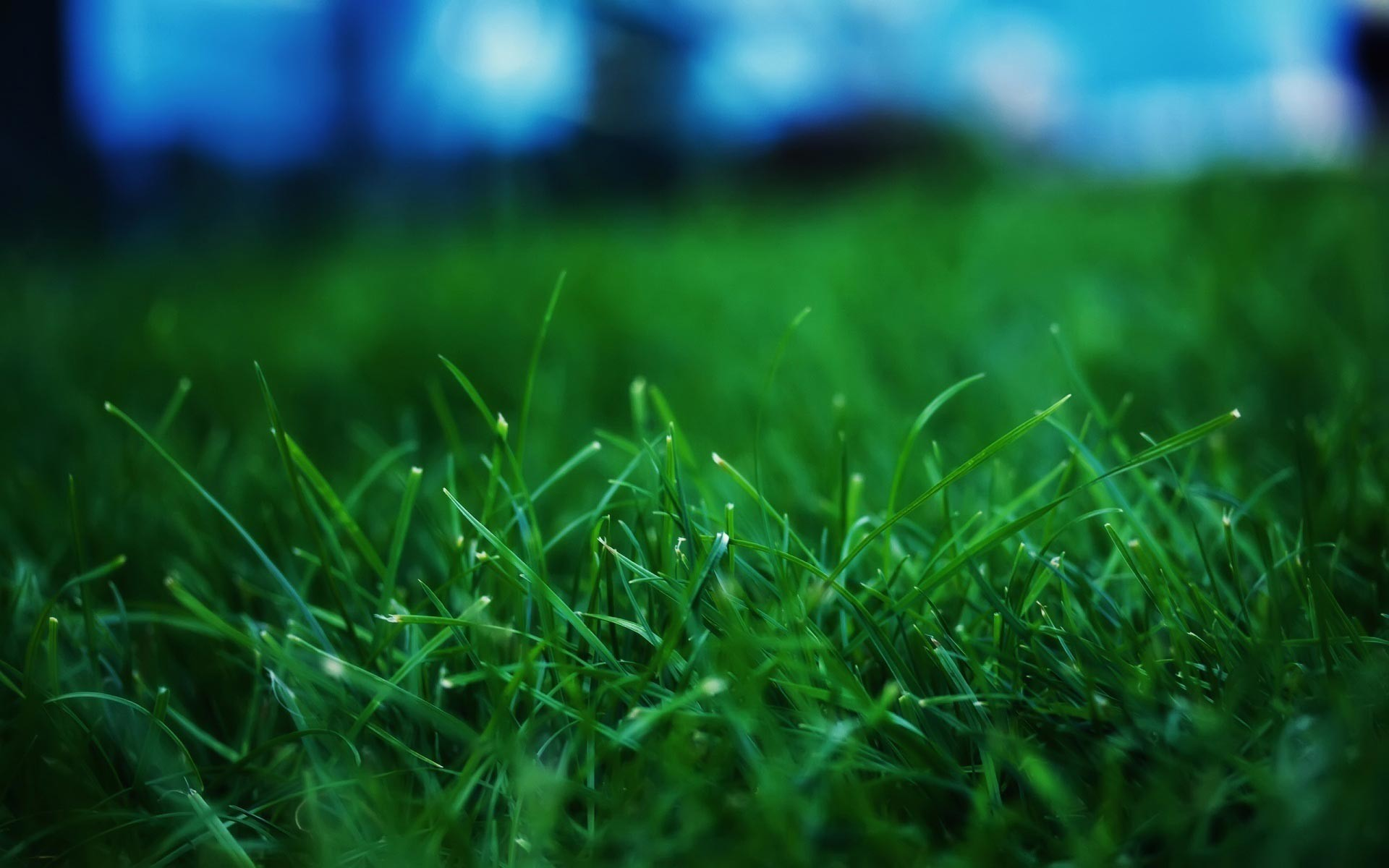 dark-green-grass-high-quality-picture-hd-free-