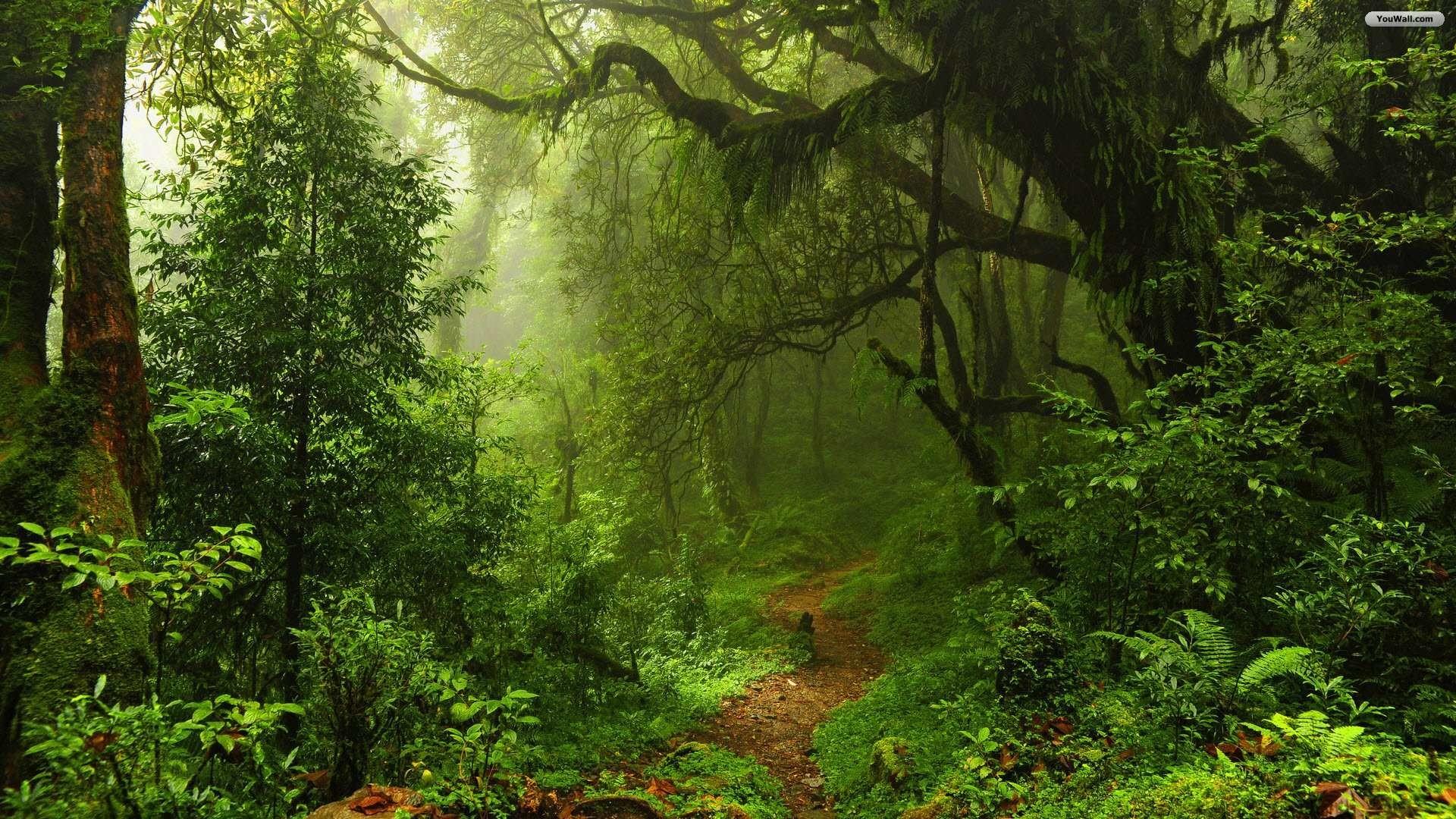 dark green forest wallpaper