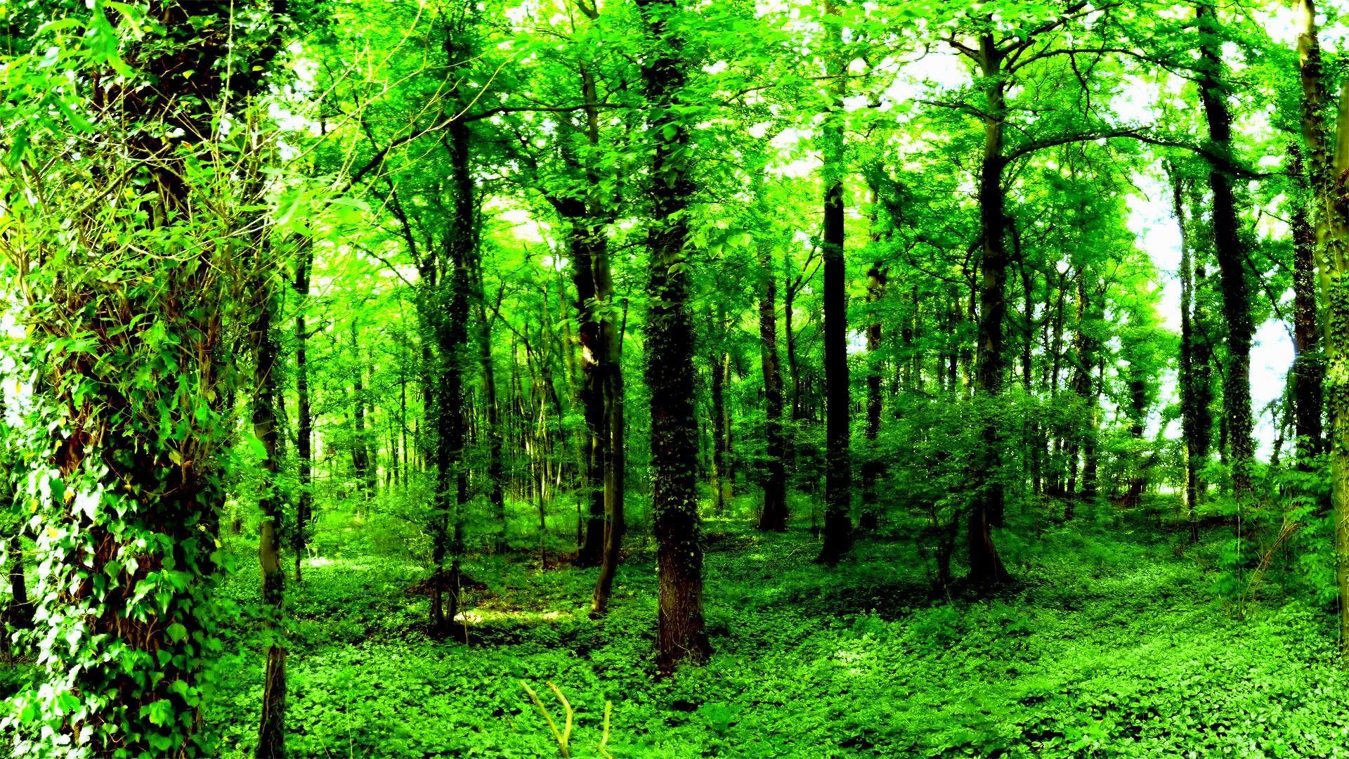 green-wallpaper-Desktop-HD-1920×1080-6-1024×576