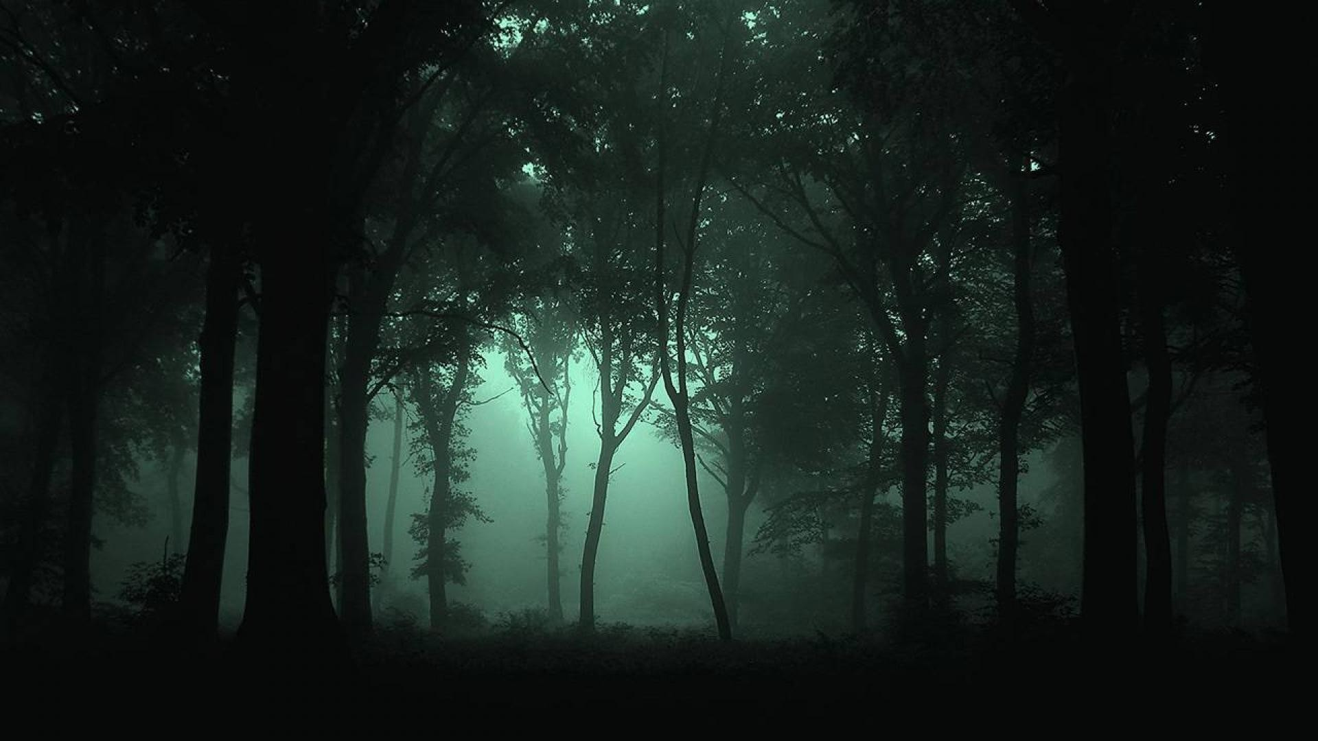 green wallpaper for forest