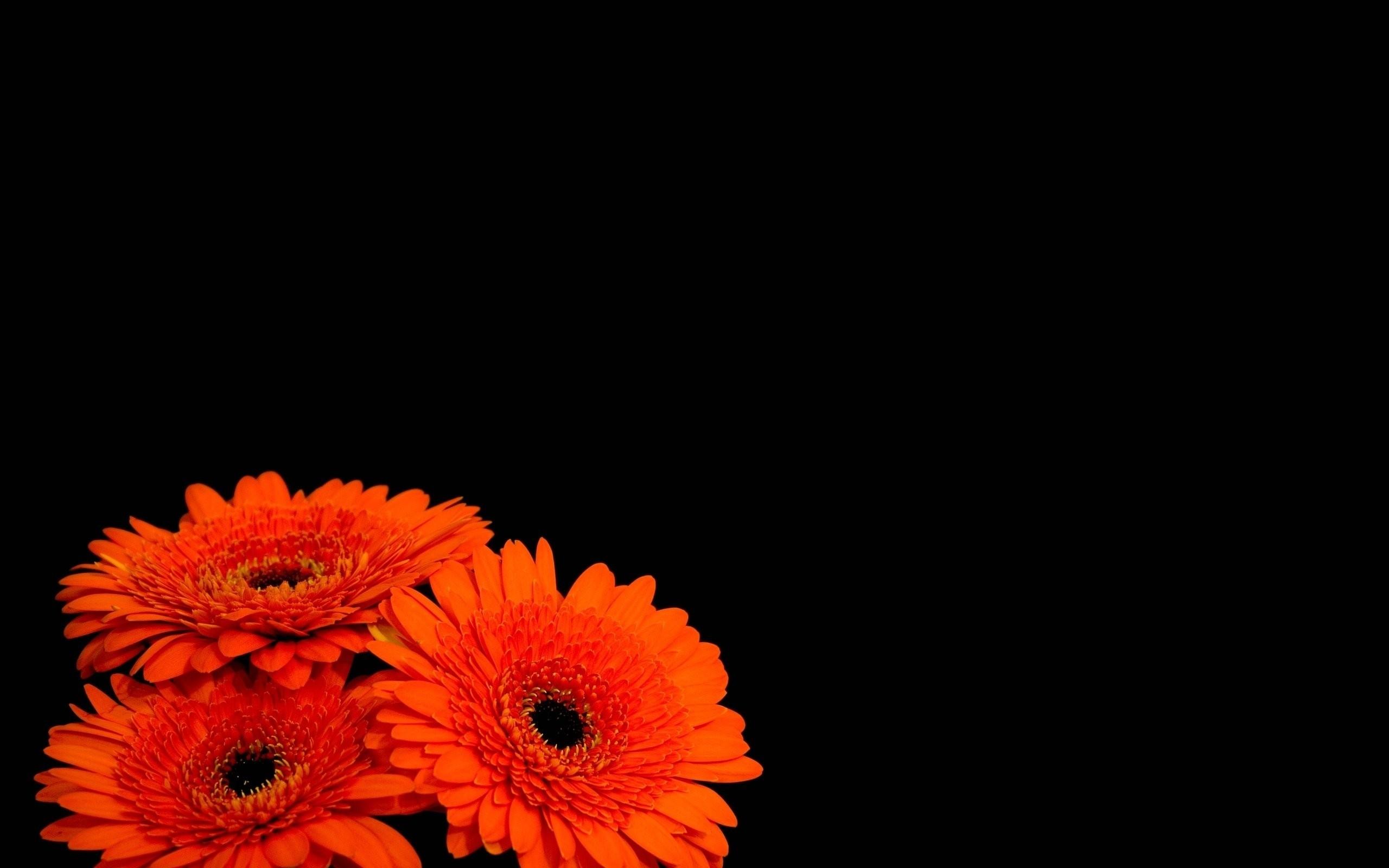 Flowers black background orange flowers wallpaper