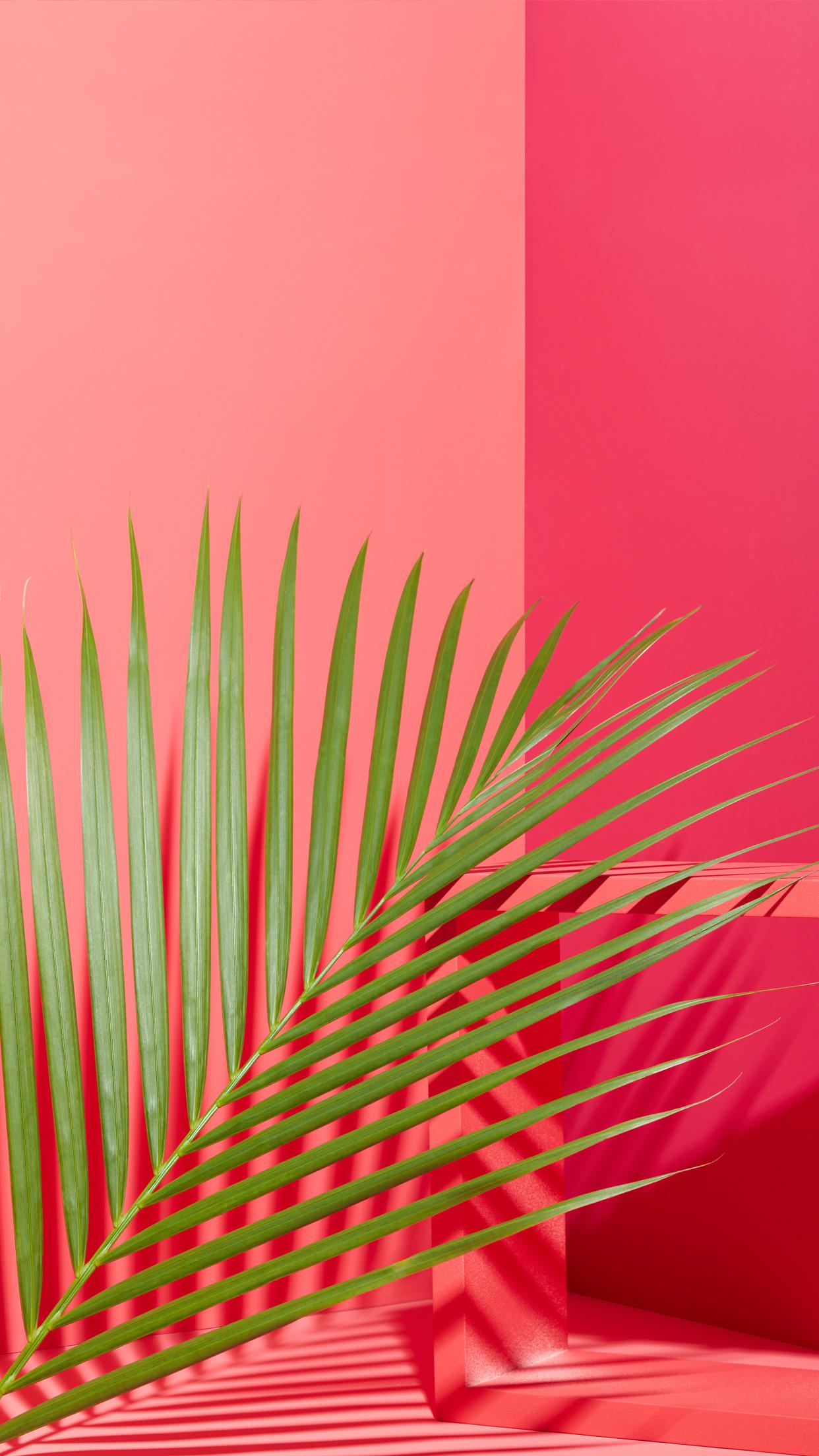 west elm – Tropical Leaves + Pink Mobile Wallpaper Download