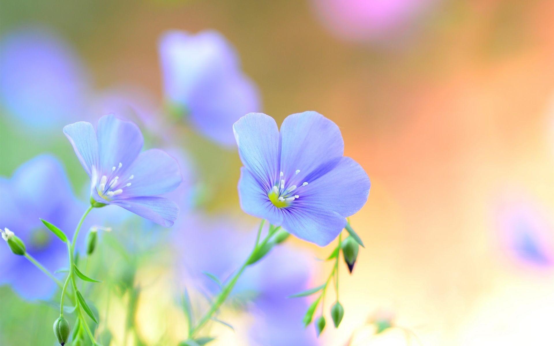 Light blue Flowers Wallpaper