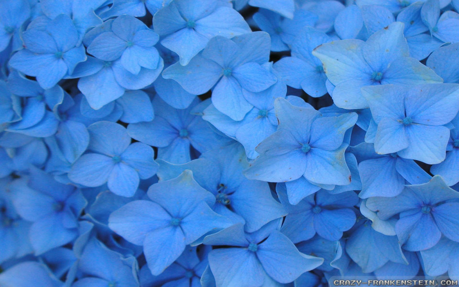 55 Light Blue Flower