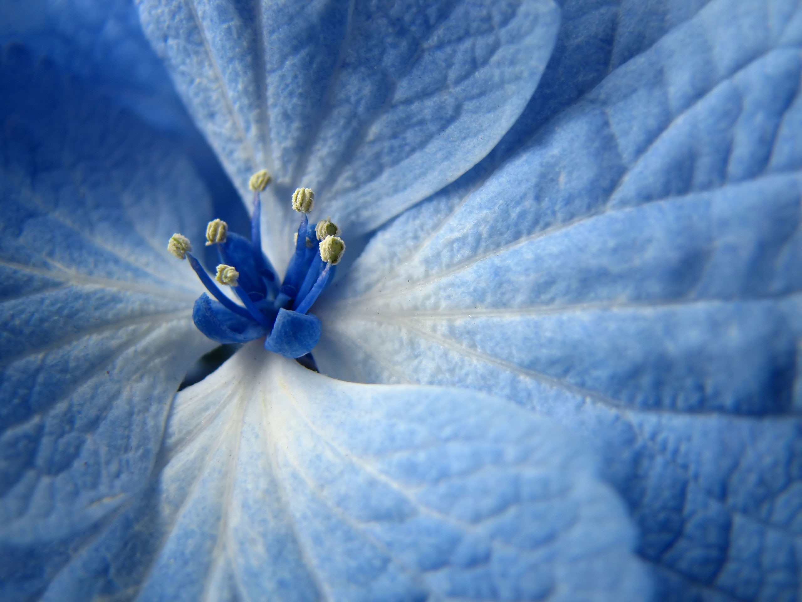 Computer Dark Blue Flowers Wallpapers, Desktop Backgrounds Id