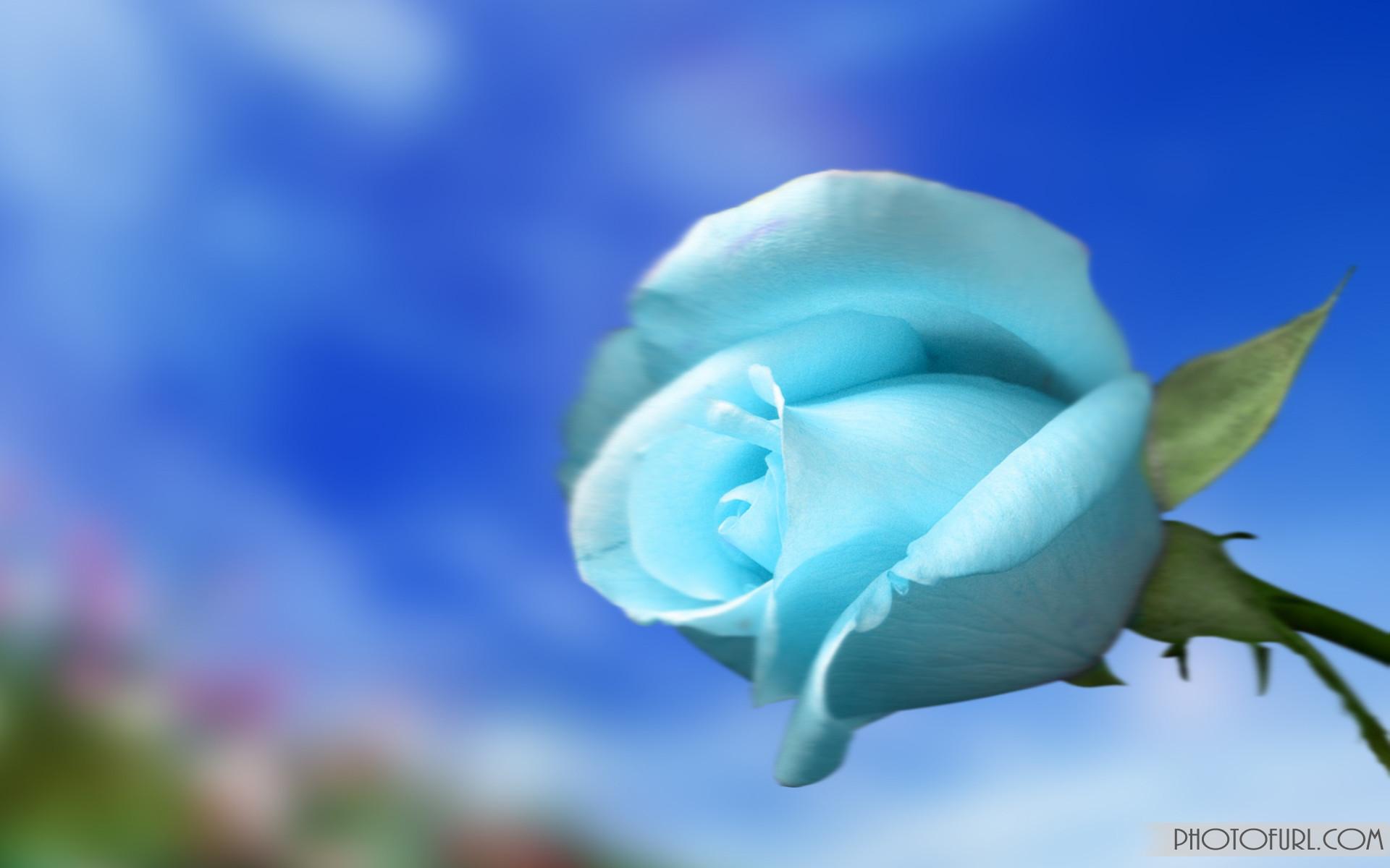 … flower screen wallpaper wallpapersafari; blue …