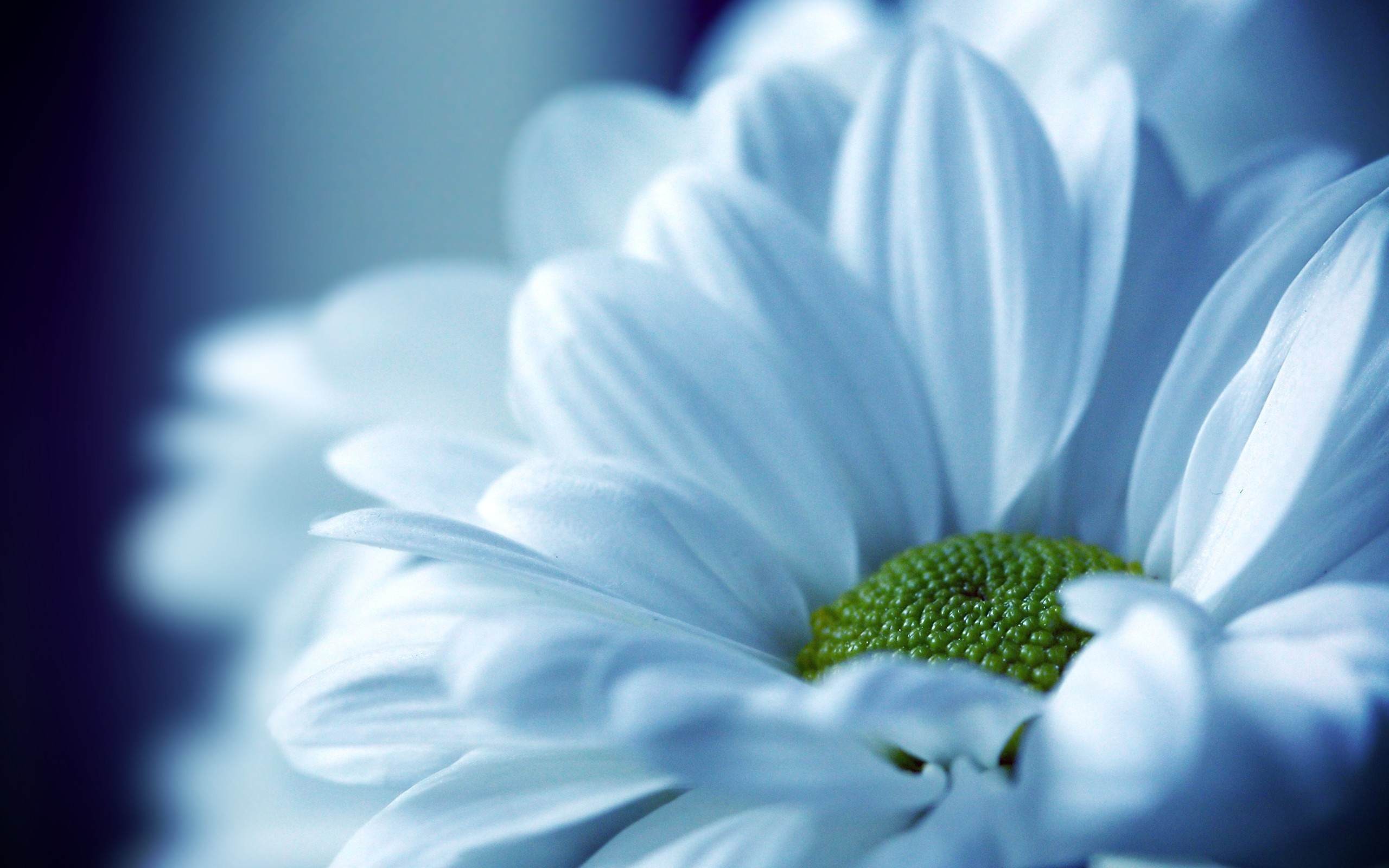 Find out: Beautiful White Flower Petals wallpaper on https://hdpicorner.com