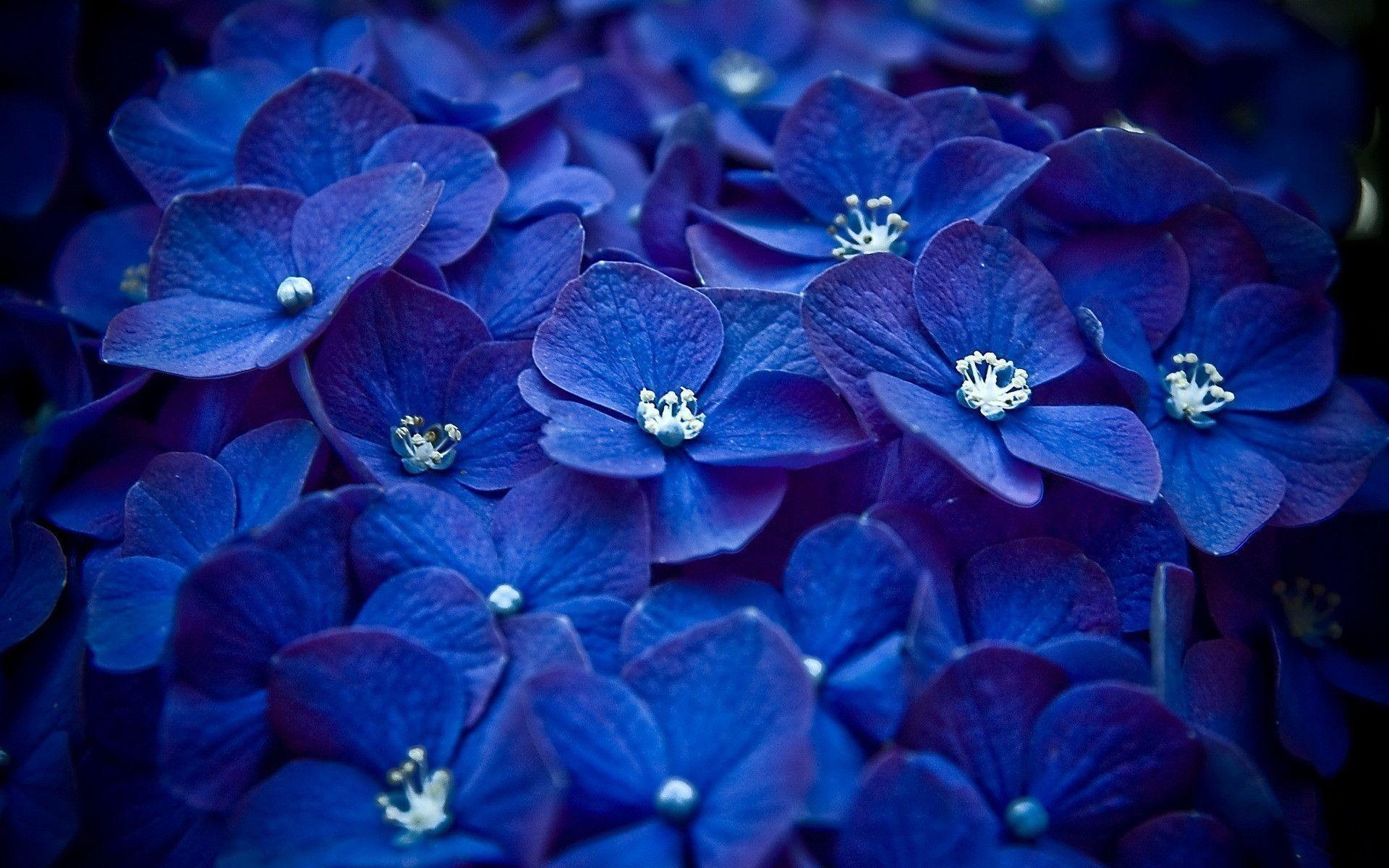 Page 1254   Light blue flower photo wallpaper hd resolution .