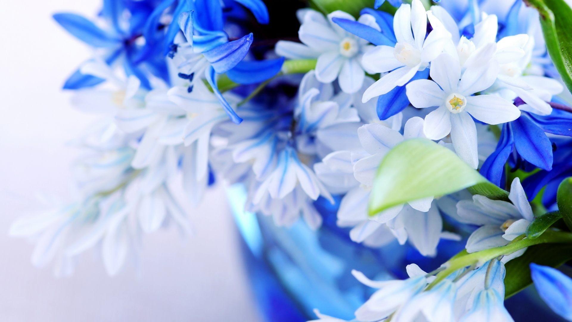 Blue Flower Background For Desktop Wallpaper