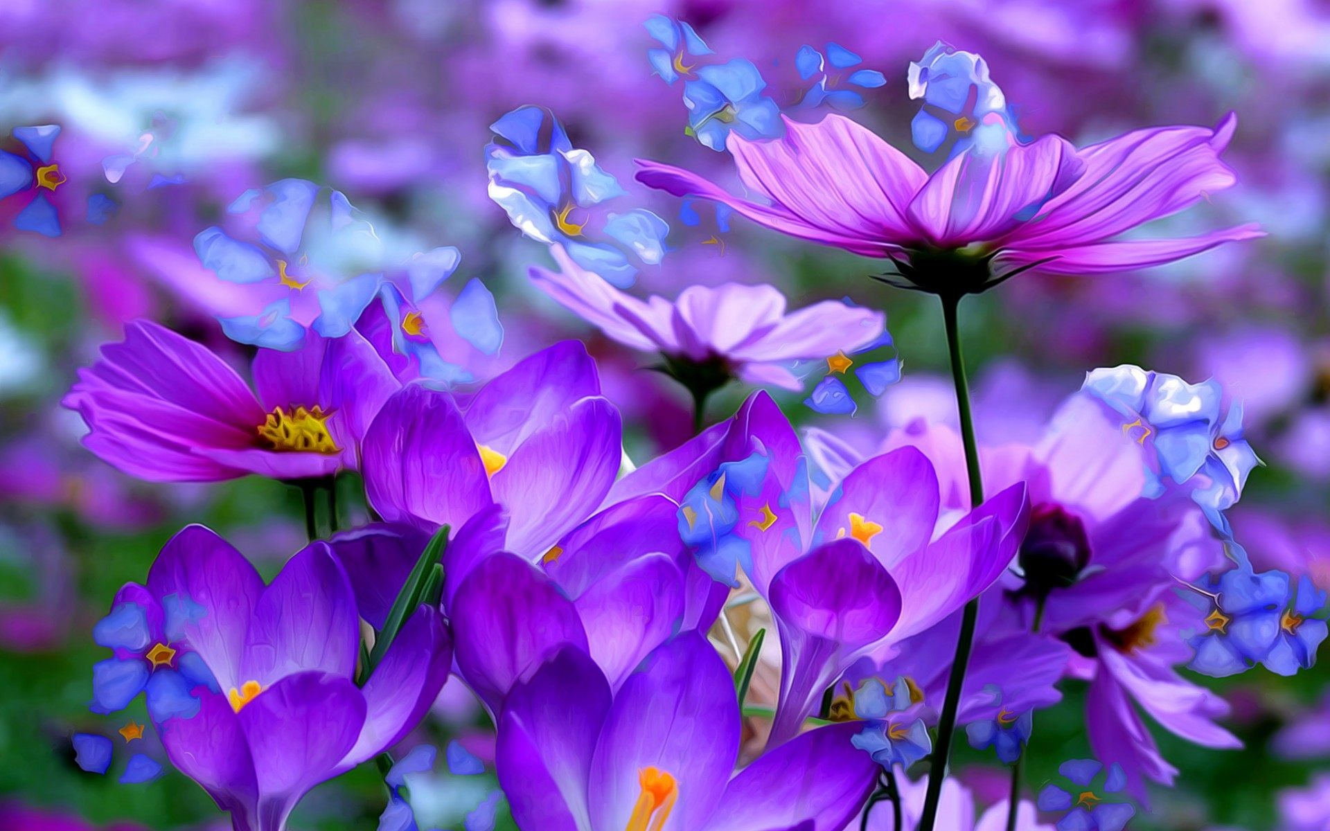 Purple Flower Wallpaper High Quality