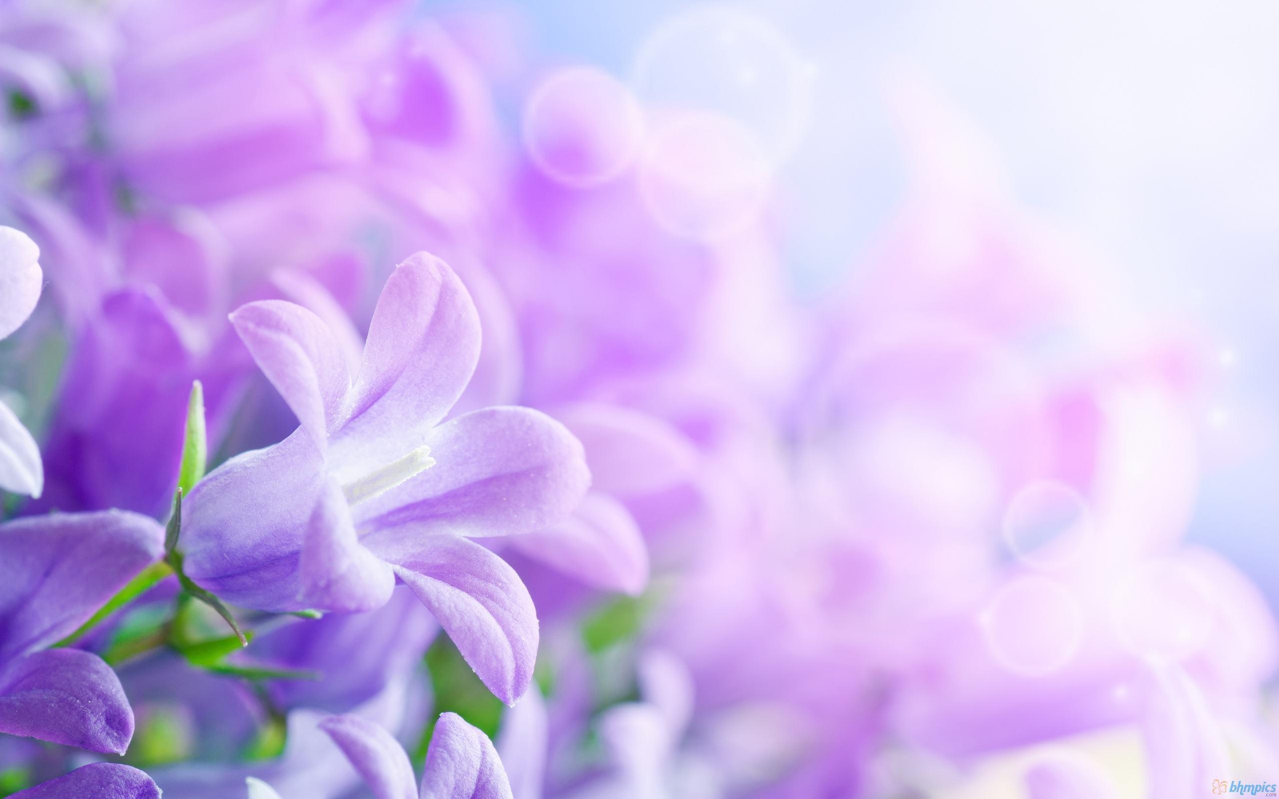 Purple Flowers Backgrounds – Wallpaper Cave