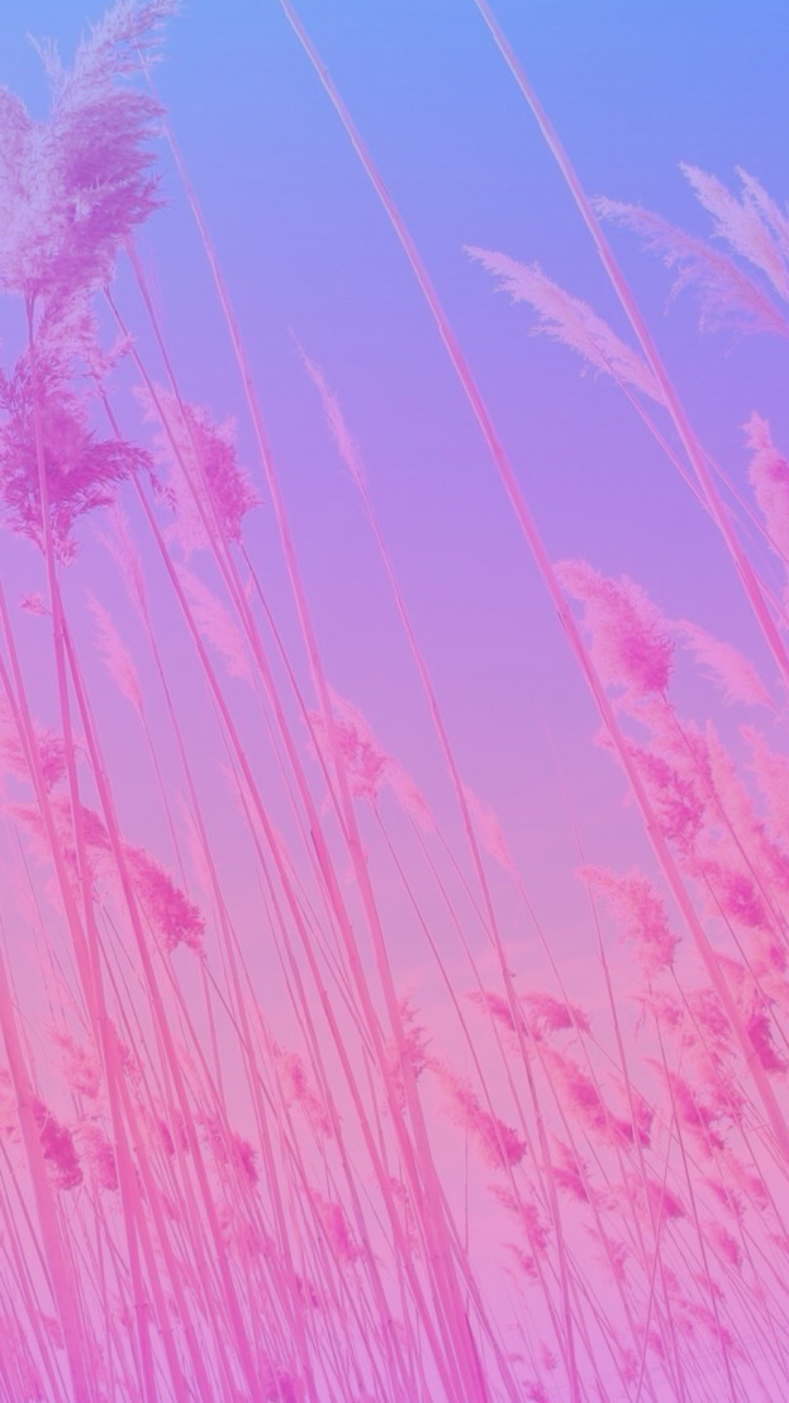 Original image not by me! I just made the ombré/gradient. Pink,