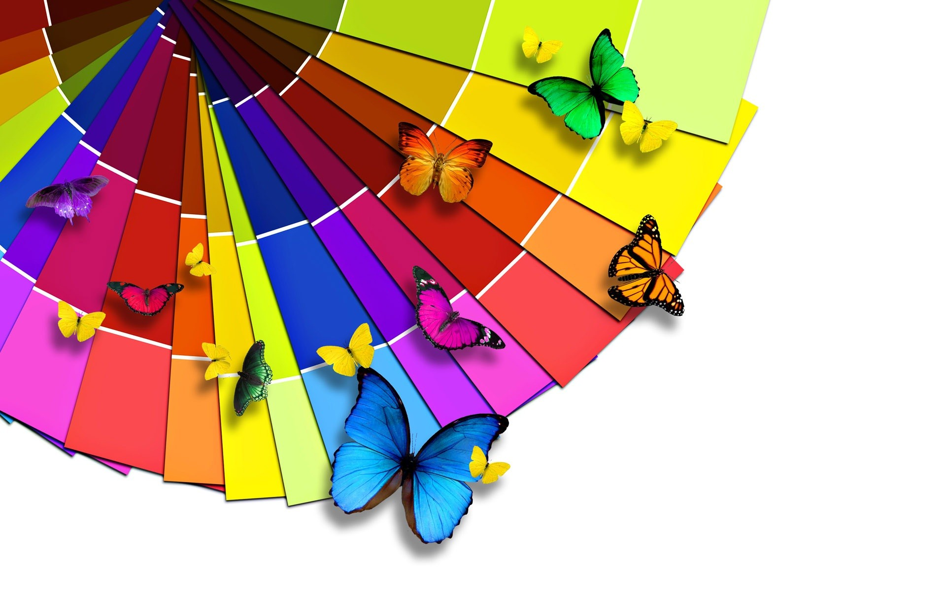 bright and colorful | Bright color palette and the Butterfly Wallpaper |  wallpaper .