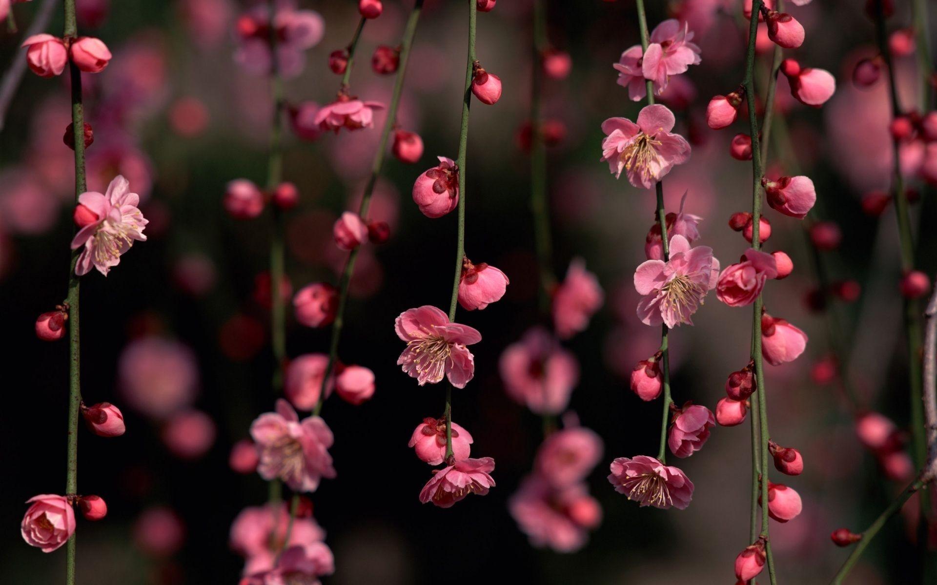 Pink Flower Wallpapers Desktop Background