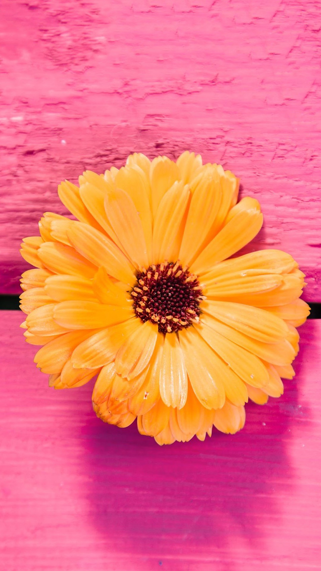Flowery Wallpaper, Nature Wallpaper, Wallpaper Ideas, Pink Wallpaper Iphone,  Orange Wallpaper, Iphone Backgrounds, Wallpaper Backgrounds, Iphone  Wallpapers, …