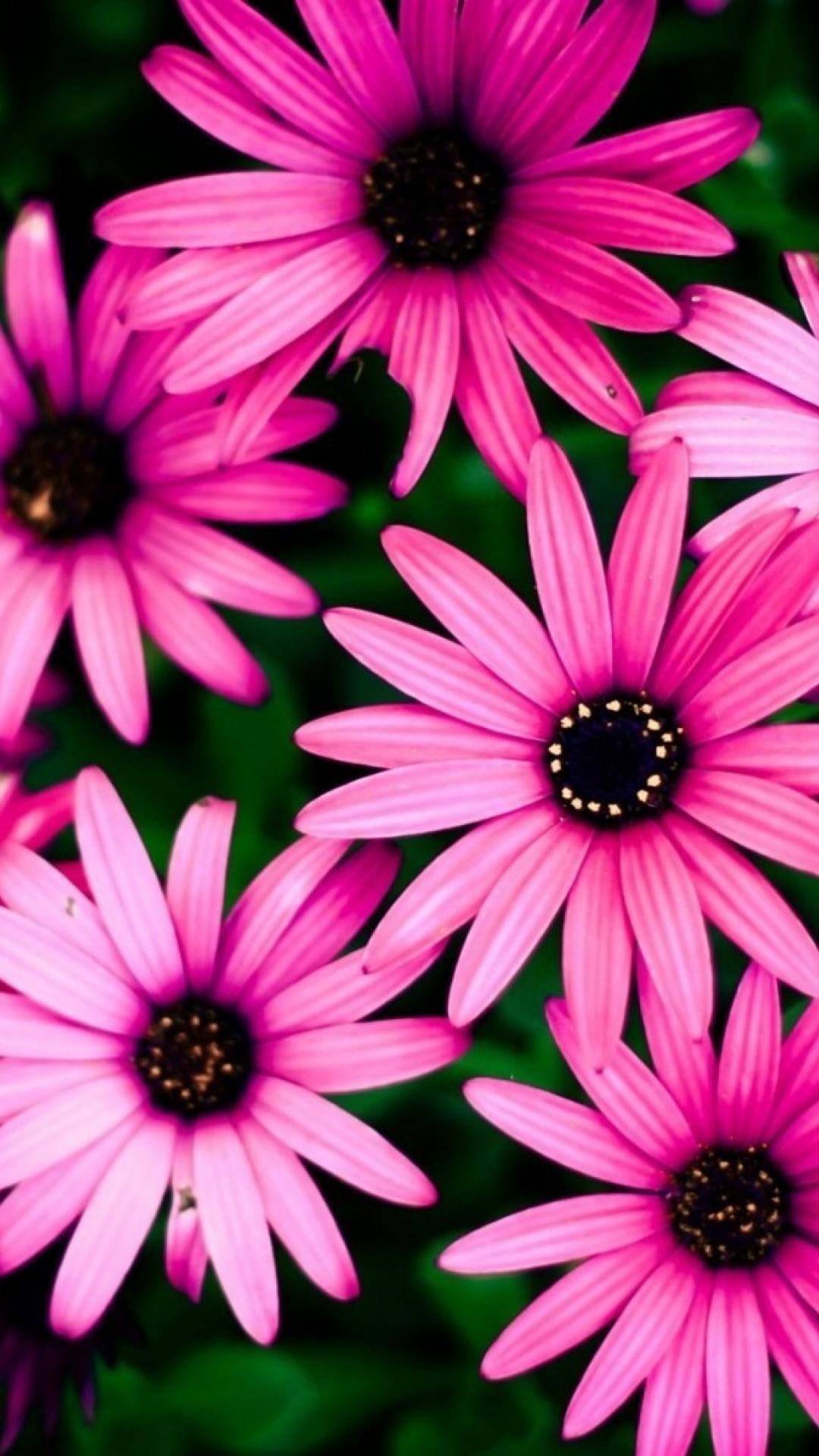 Wallpaper Phone Iphone 6 Plus Flower