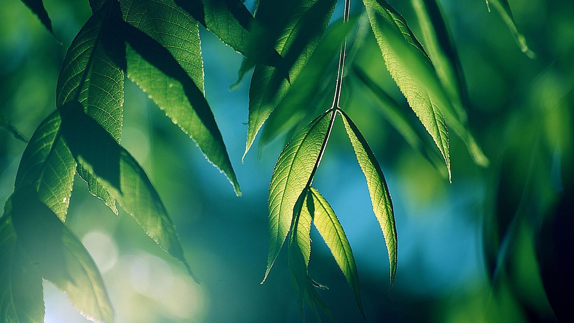 Cool Green leaves background for desktop