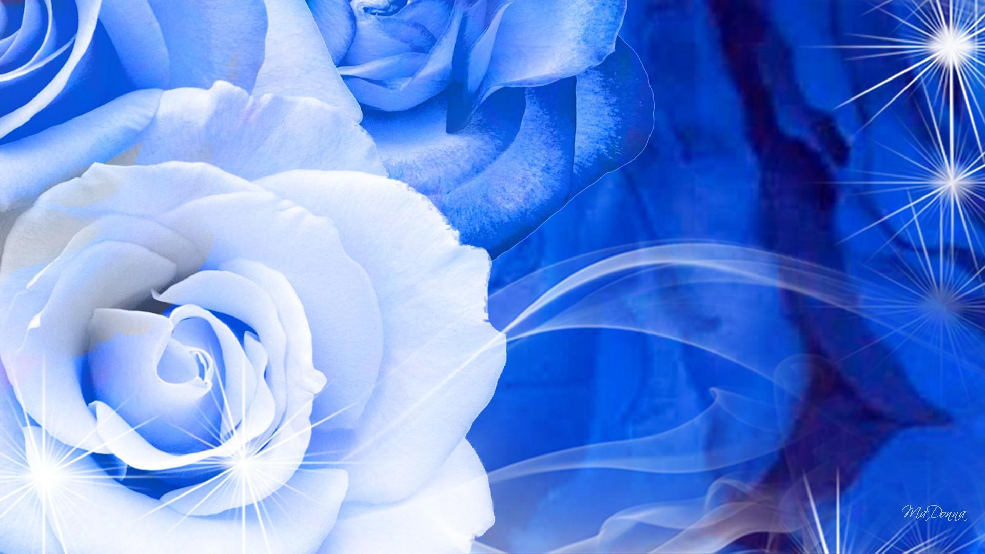 blue-and-white-rose-wallpaper-6-hd-wallpaper.jpg (1920×1080) | blue flowers  | Pinterest | Wallpaper, Flower wallpaper and Hd desktop