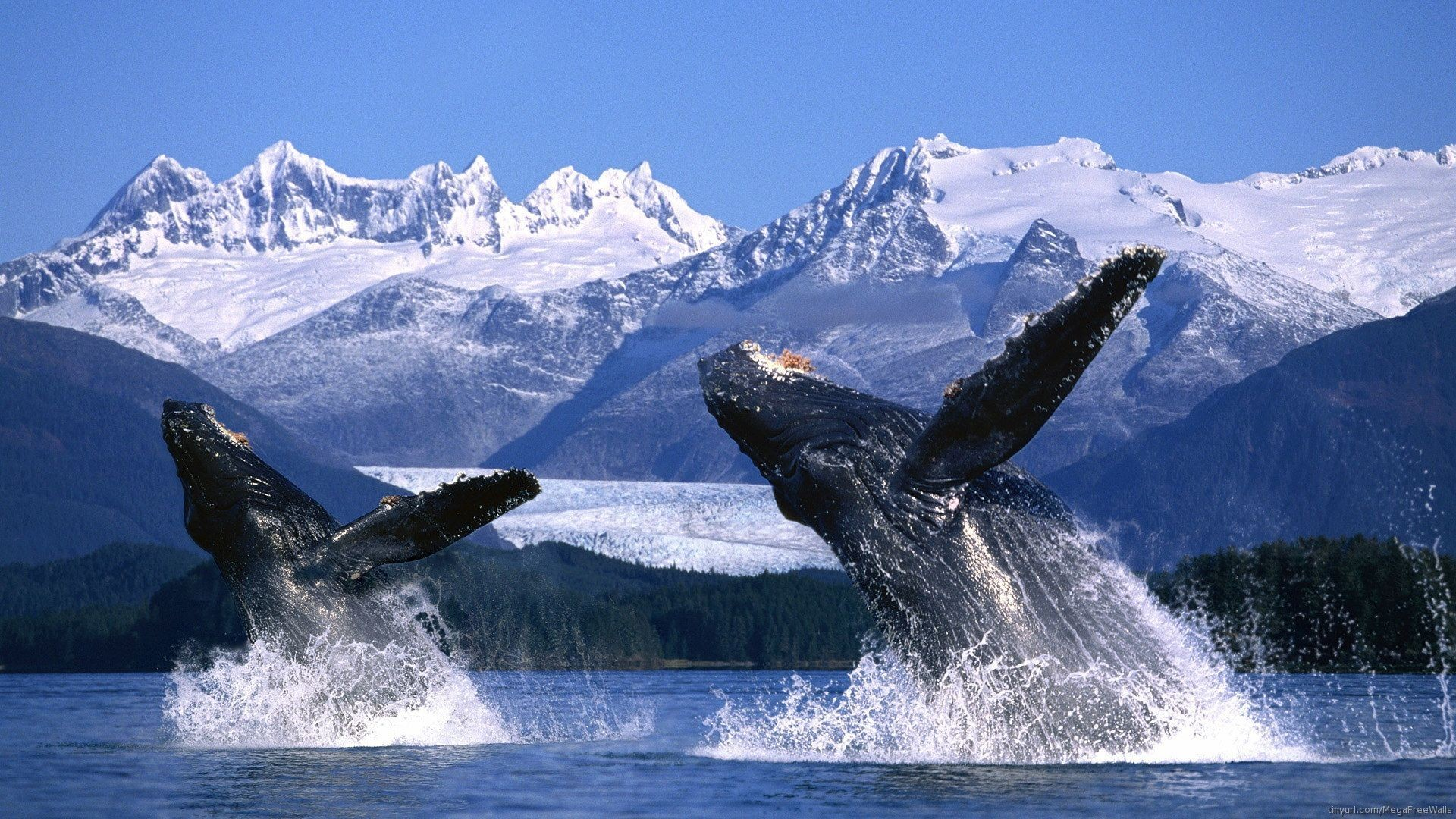 2 Blue Whale HD Wallpapers