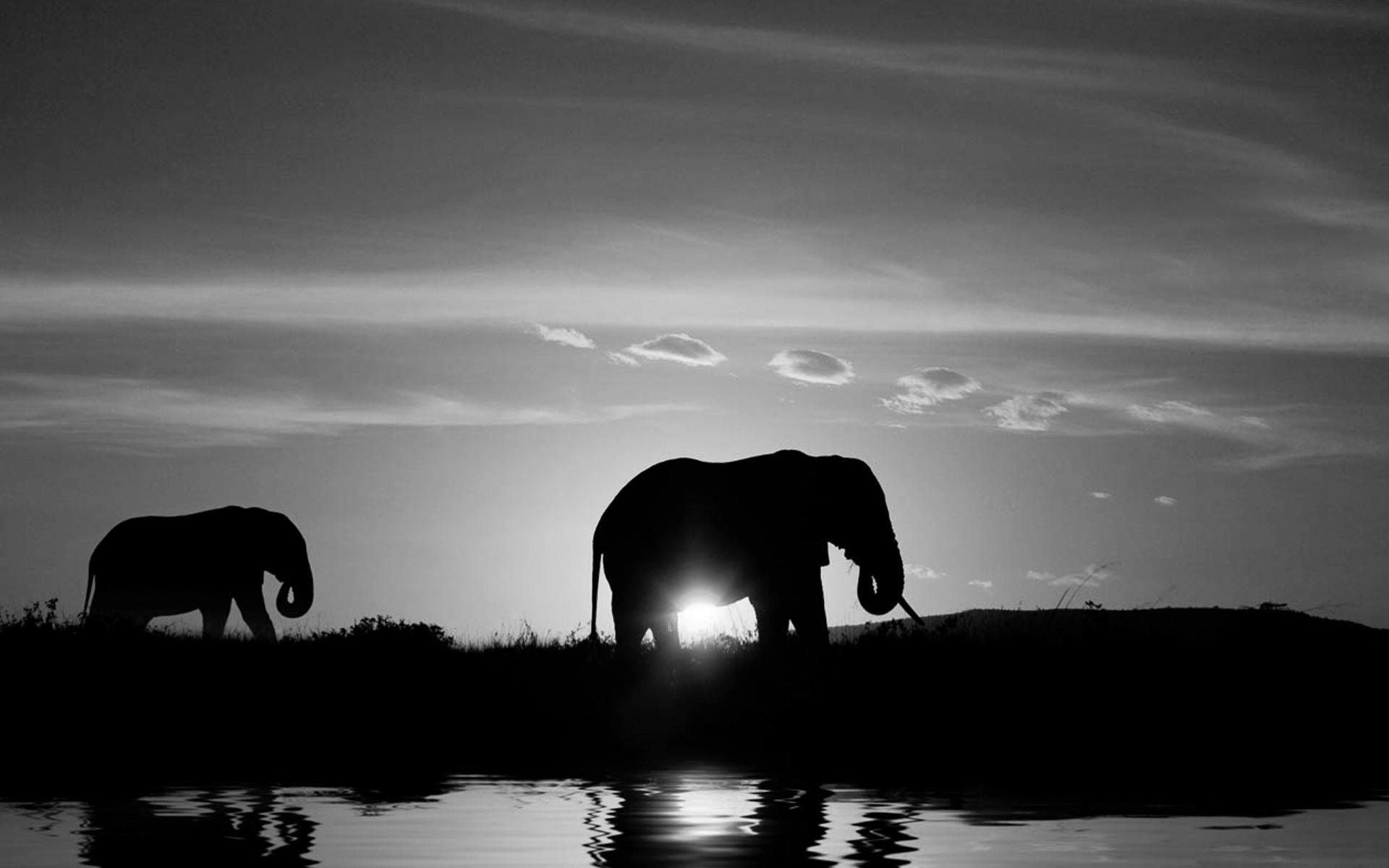 Elephant Black And White Wallpapers Mobile