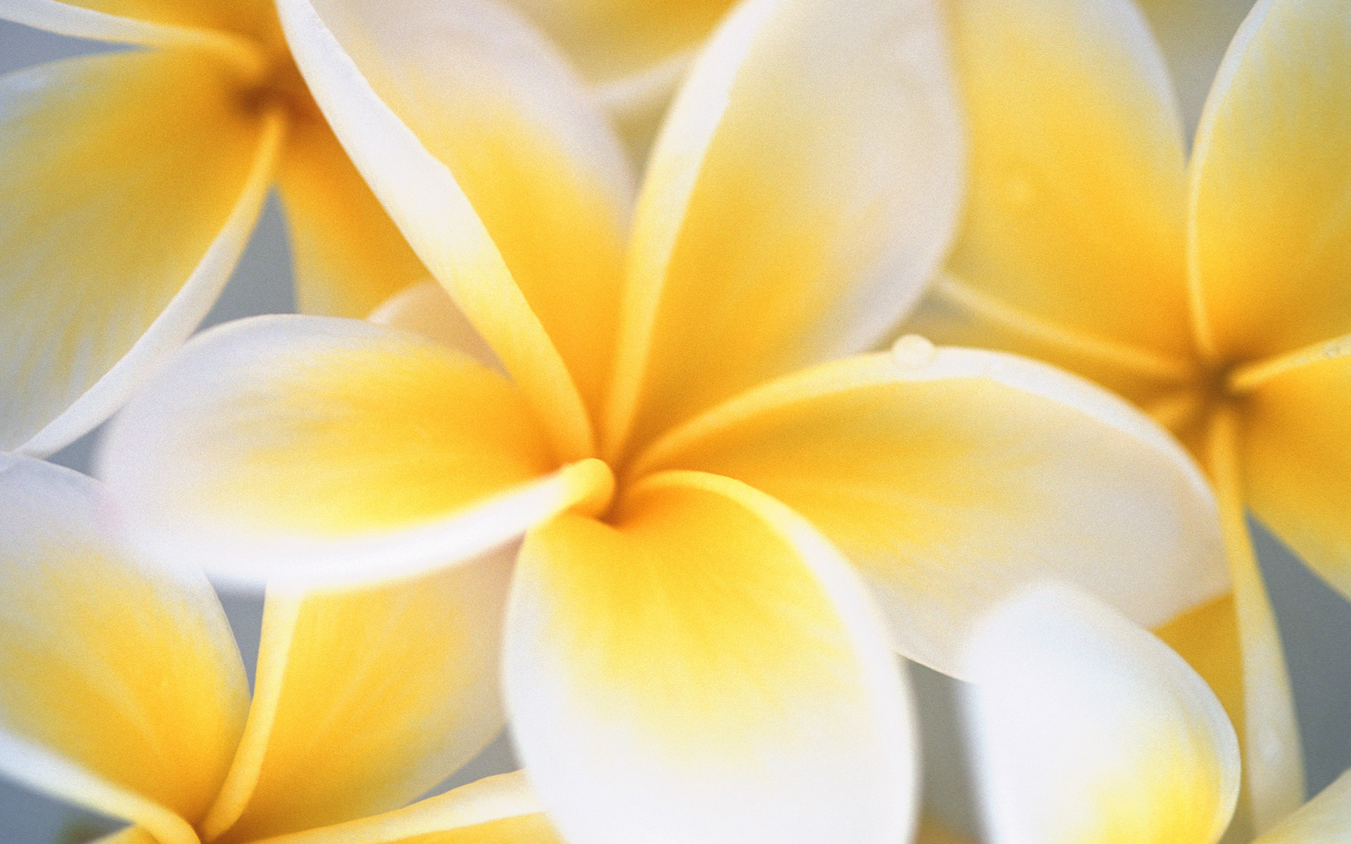 Yellow and White Flowers Wallpaper