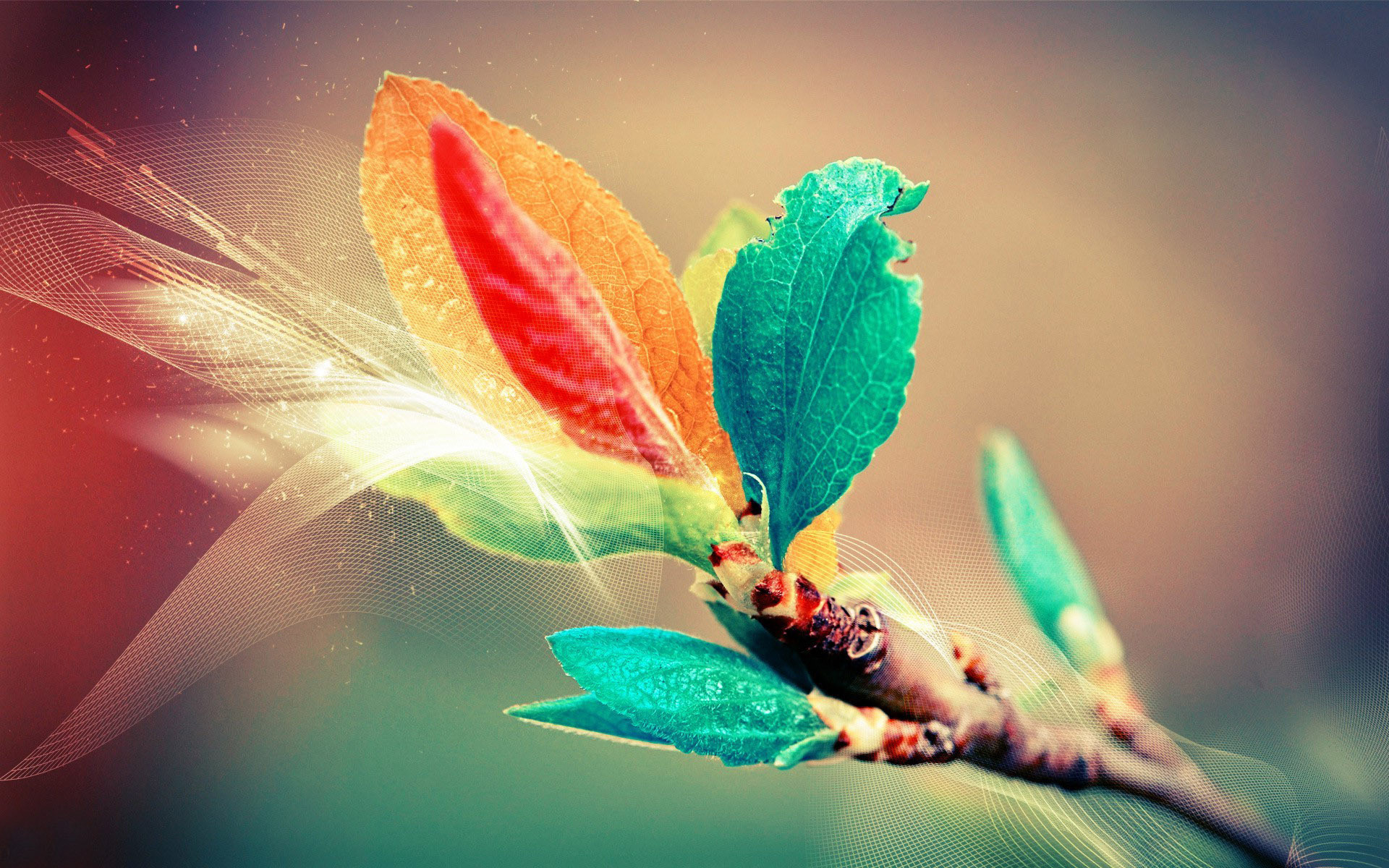 Colorful Background 16