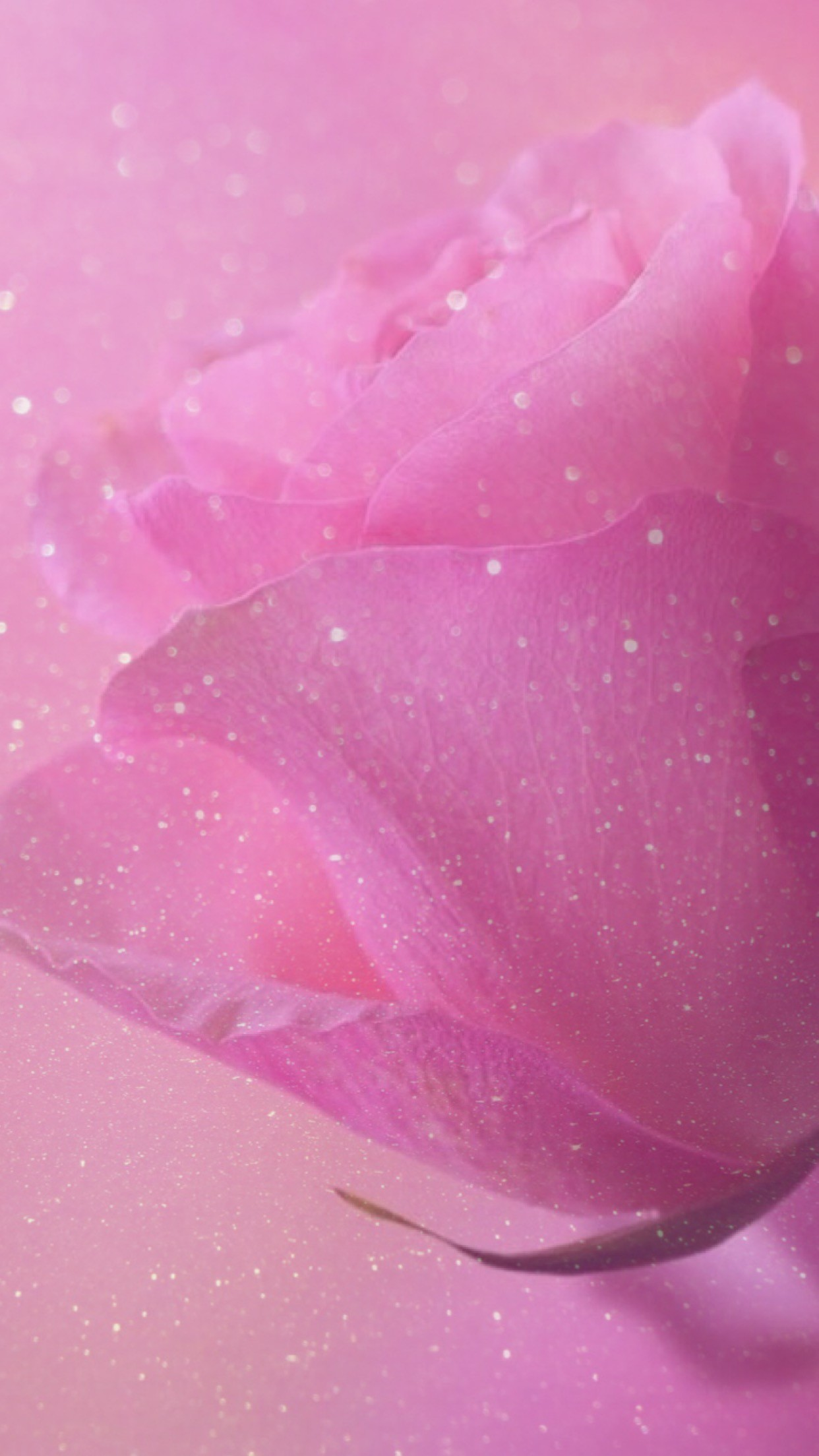 rose, sparkle, glitter, wallpaper, background, pink, pretty, girly,