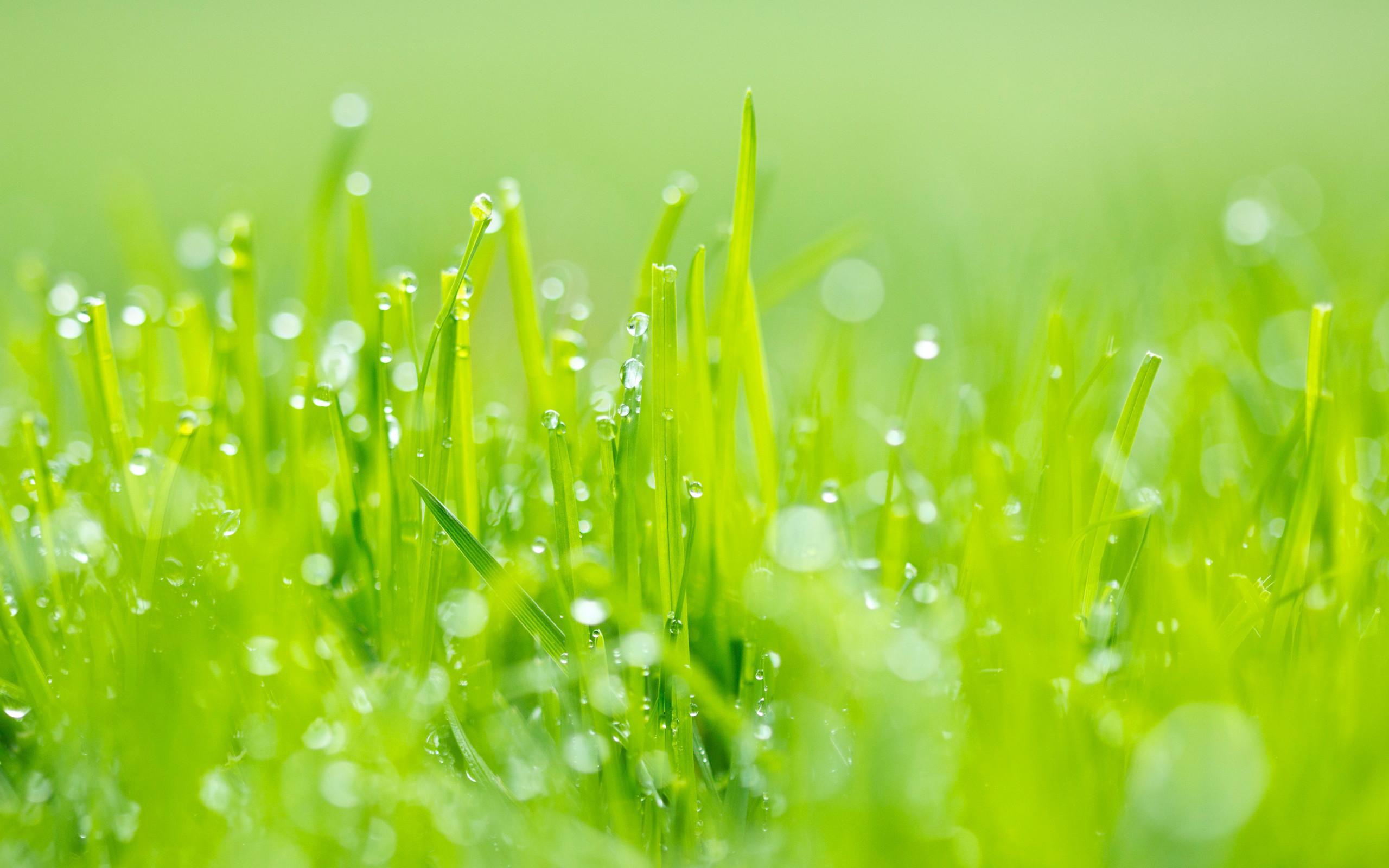 Lovely Grass Wallpaper Hd Wallpapers